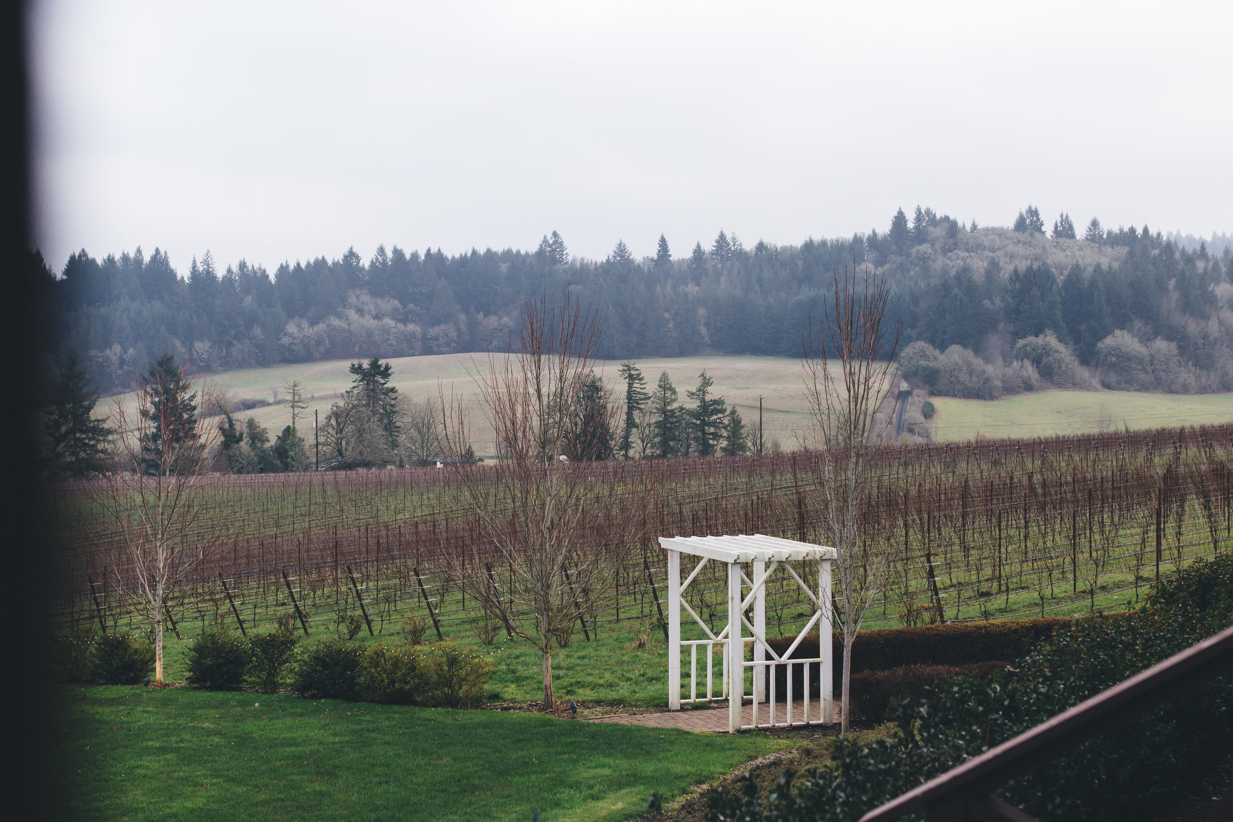 Zenith Vineyard New Years Eve Wedding-31.jpg