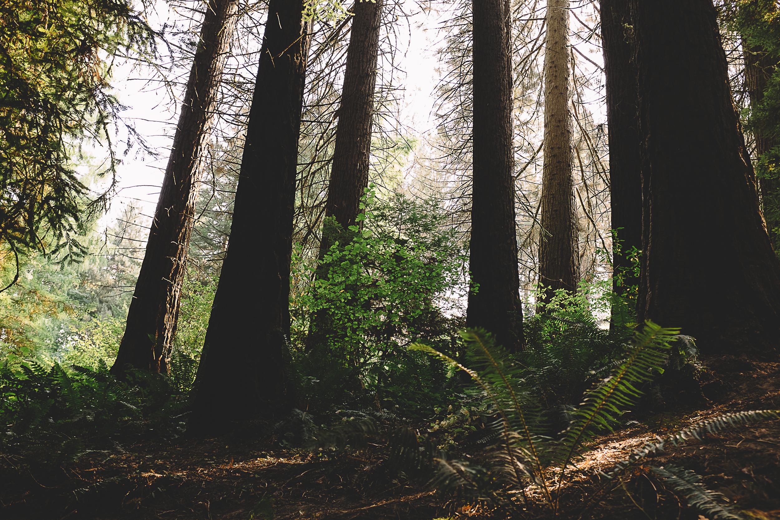 Hoyt Arboretum-1.jpg