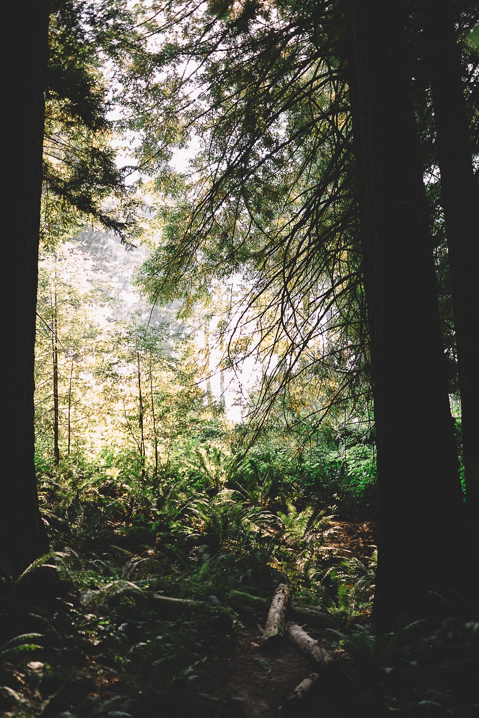 Hoyt Arboretum-4.jpg