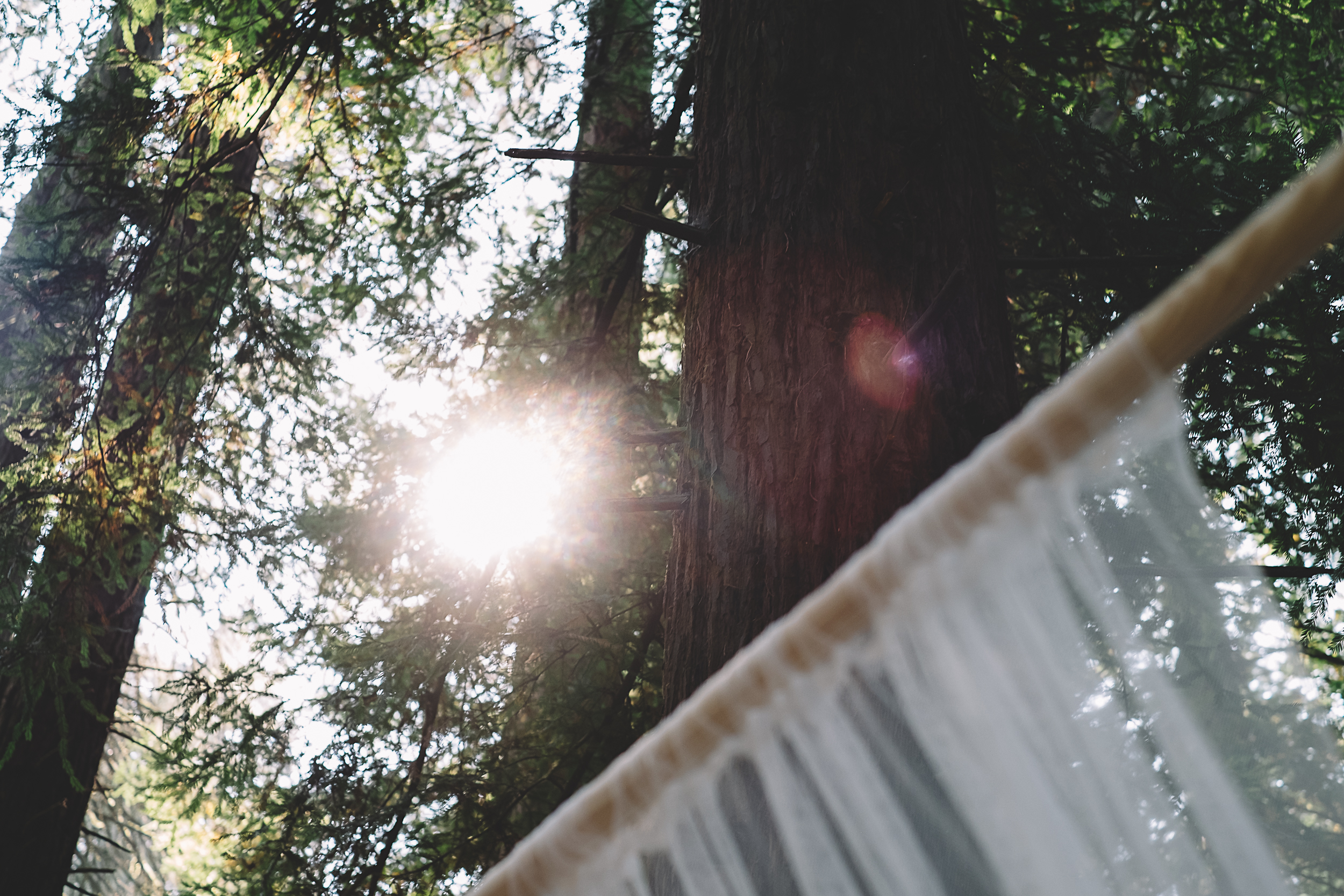 Hoyt Arboretum-8.jpg