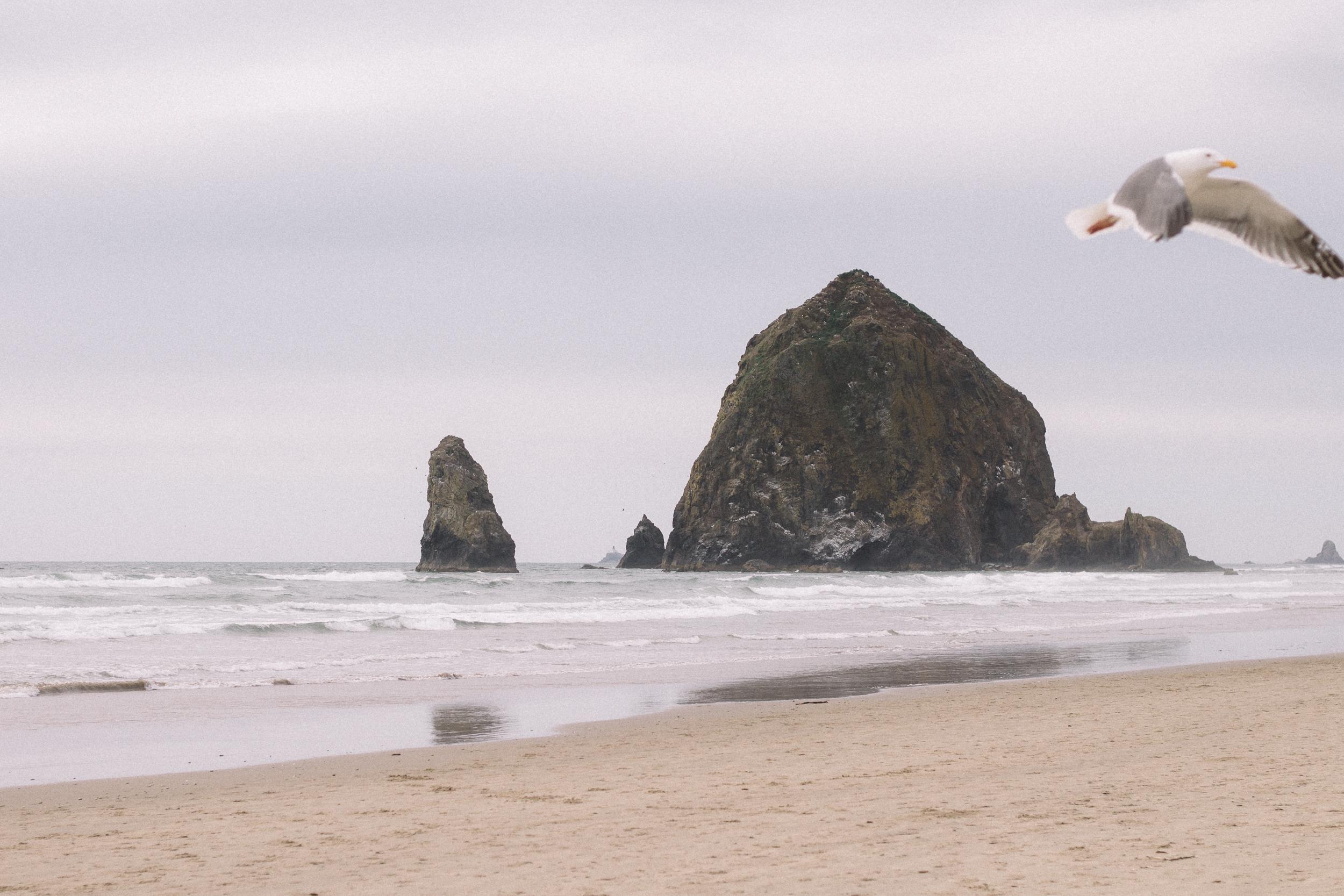 Cannon Beach Proposal Photography-3.jpg