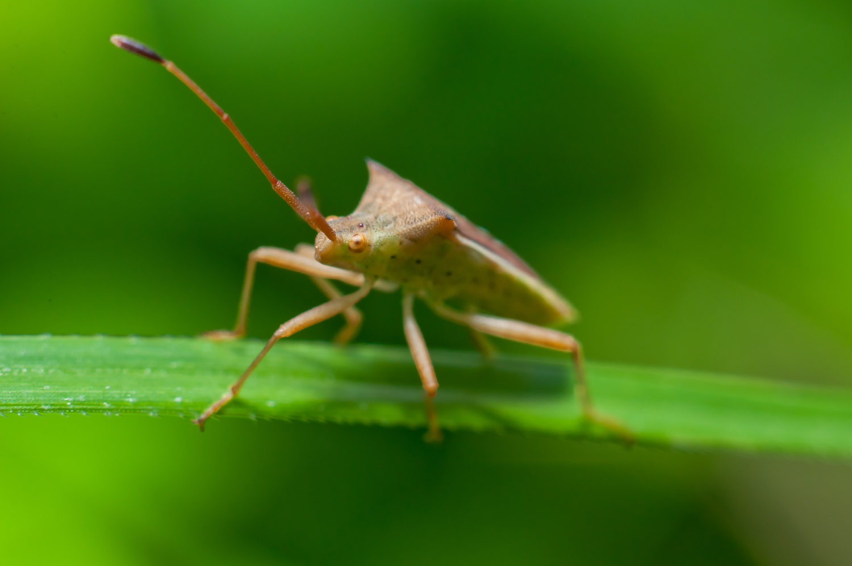 Insekter i Areklien