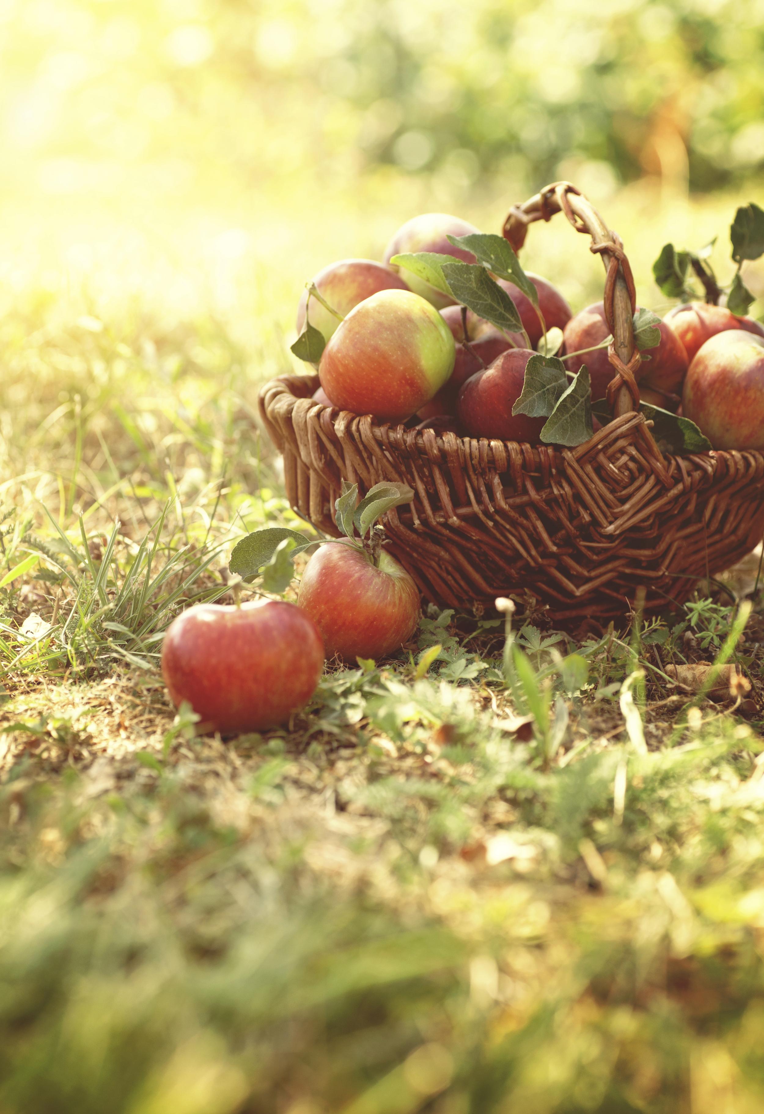 La deg inspirere av alle de flotte eplesortene på Eplefestivalen 2015