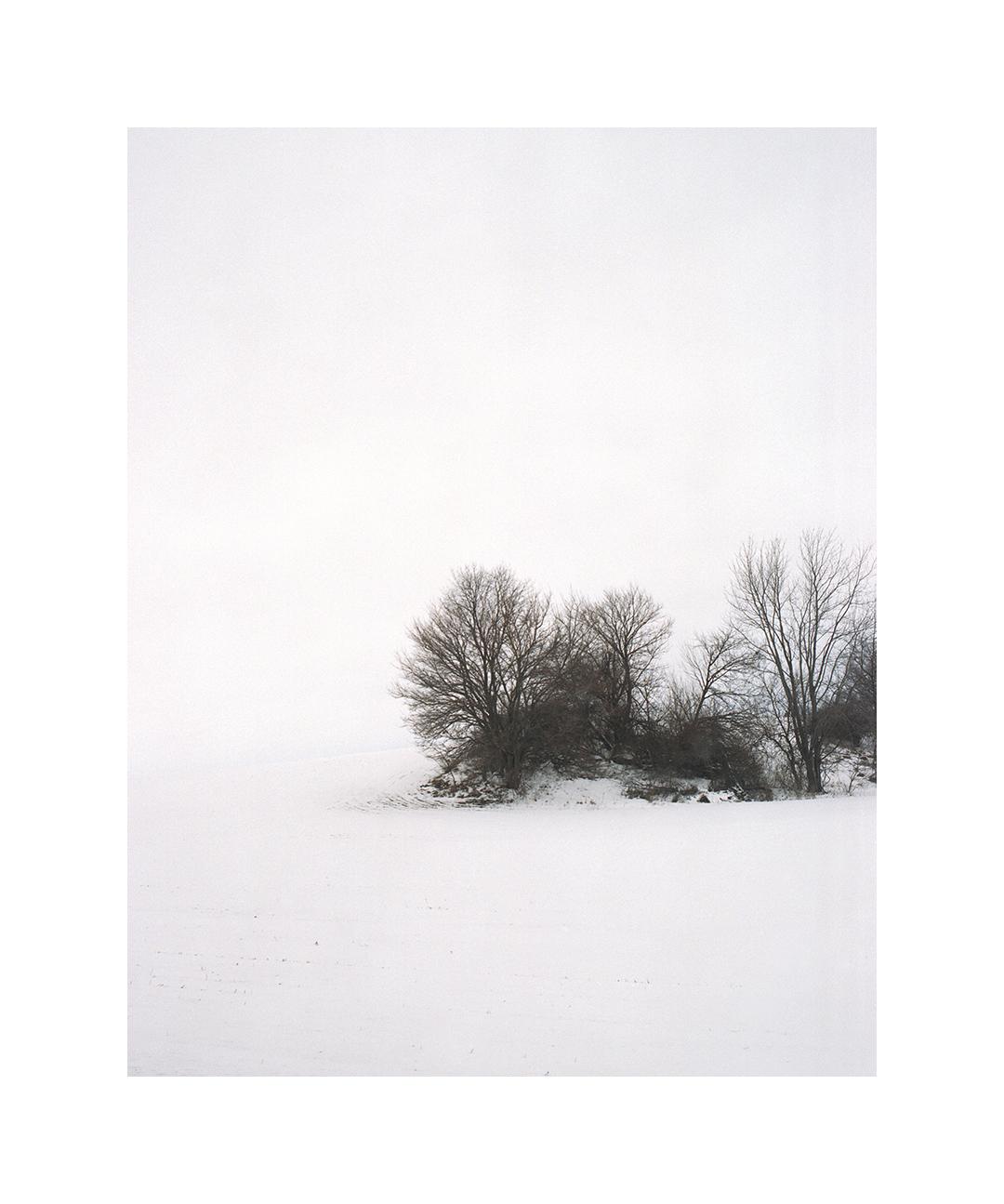 landscapev_0202.jpg