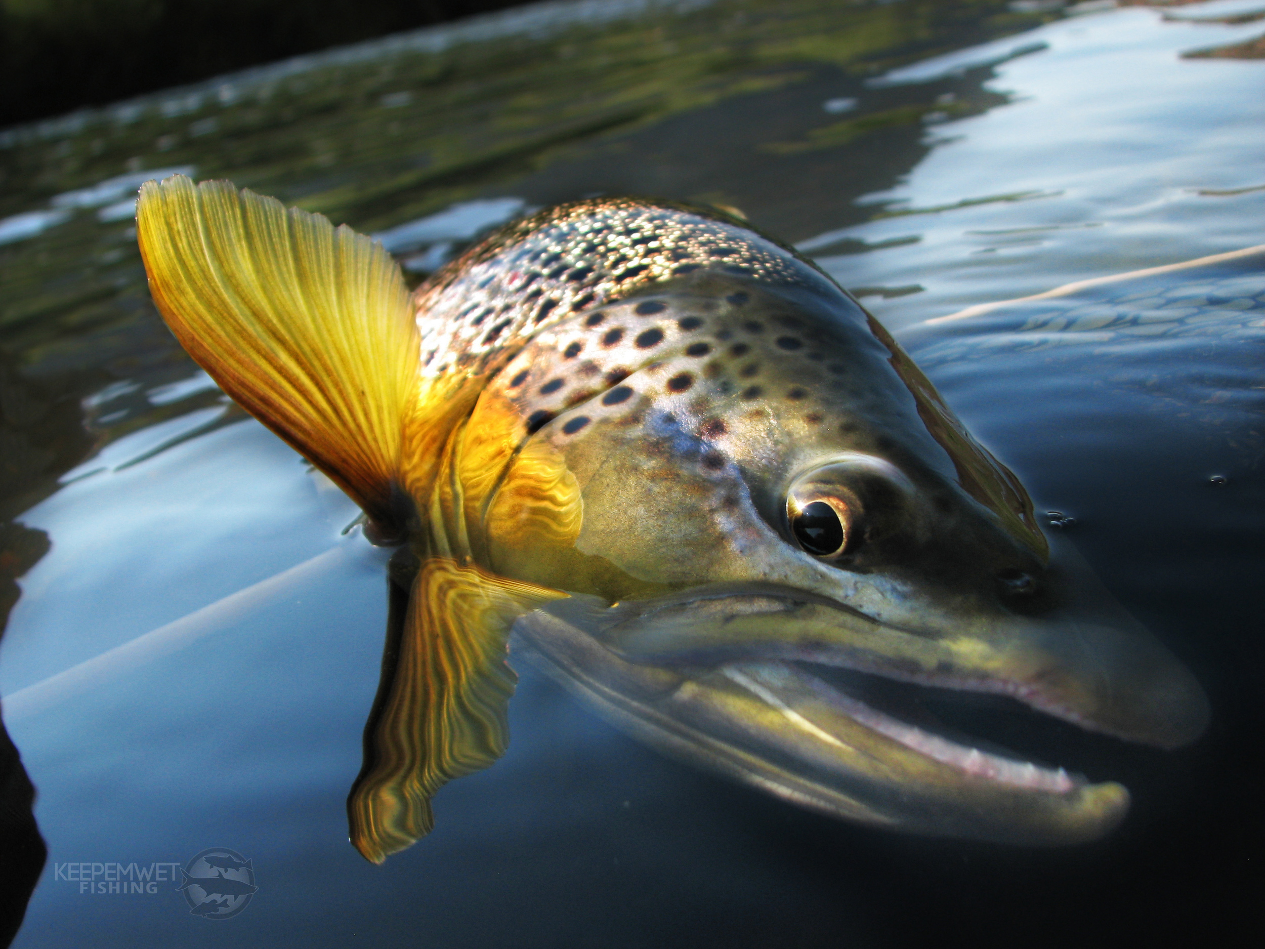 """""""This type of representation is so much more appealing to the eye no matter what kind of fish it is."""" Photo by Bryan Huskey."""