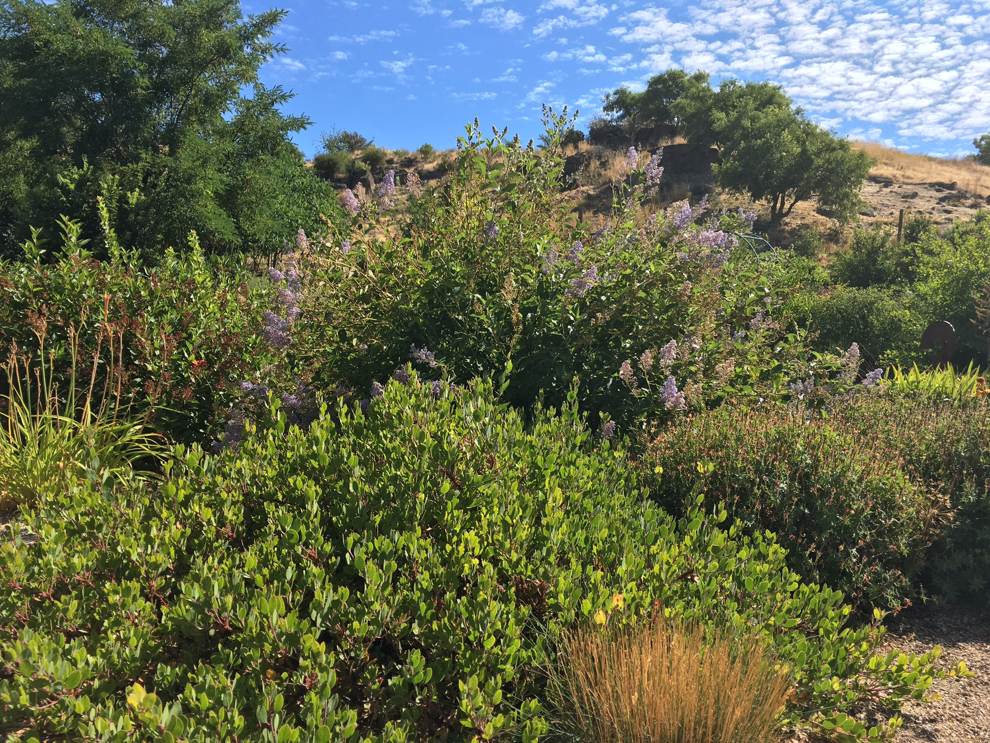 """This native landscaping at Dragin' Wing Farms is a great example of how water savings can be achieved by going native in your yard. """"After planting a native garden your water bill will drop significantly,"""" says Sean Dahlman, a native plant specialist with the Foothills Learning Center."""