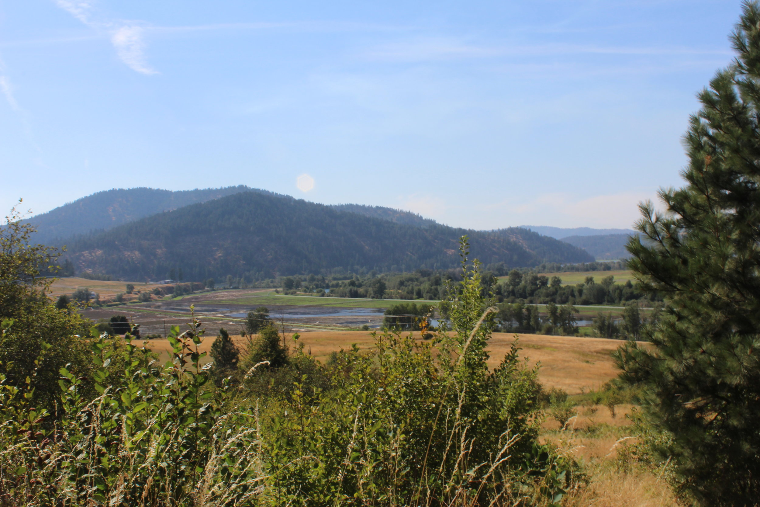 Blacks Lake along the lower Coeur d'Alene River is a marshy area where mining-contaminated sediments have accumulated.