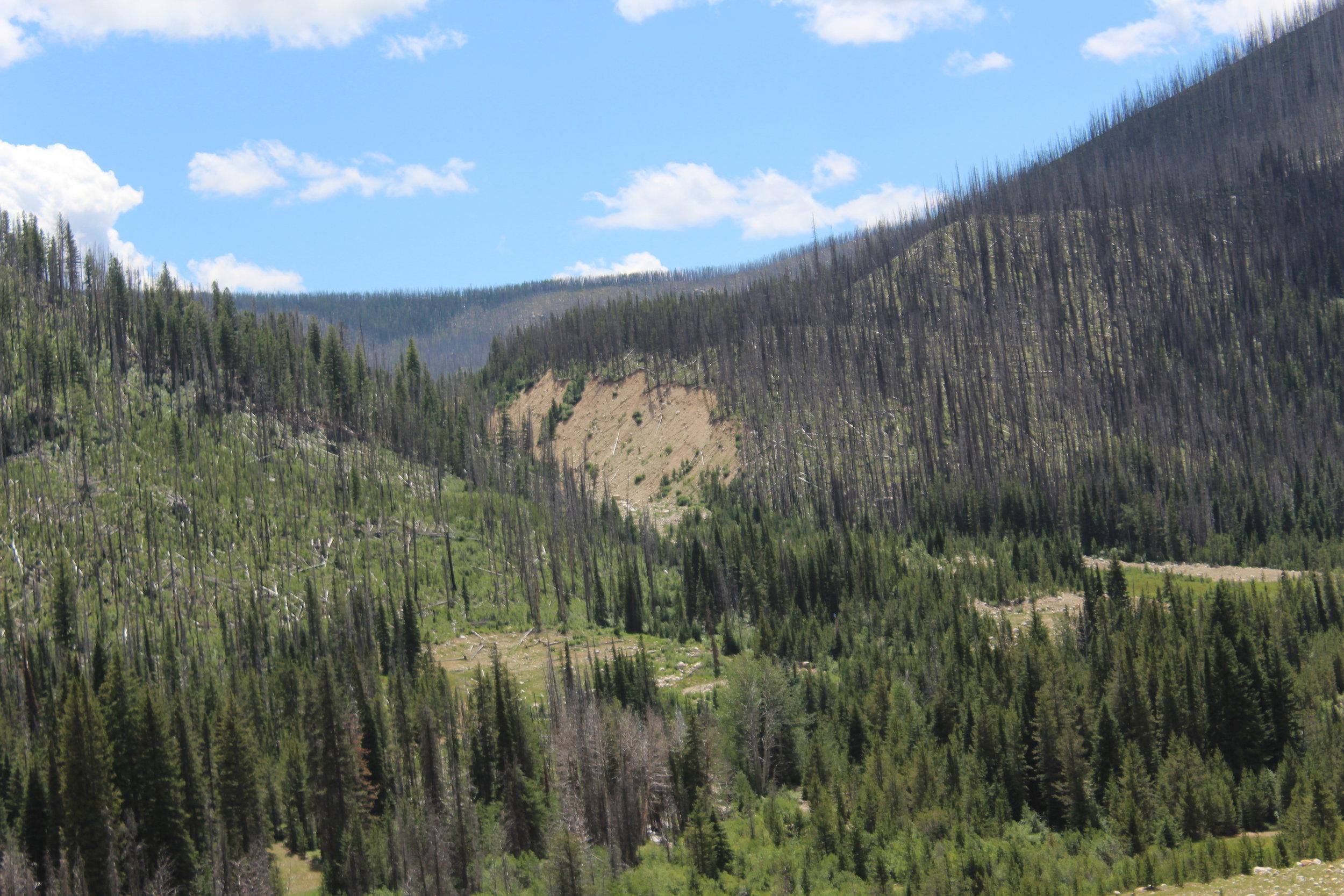 "East Fork of Meadow ""Blowout"" Creek"