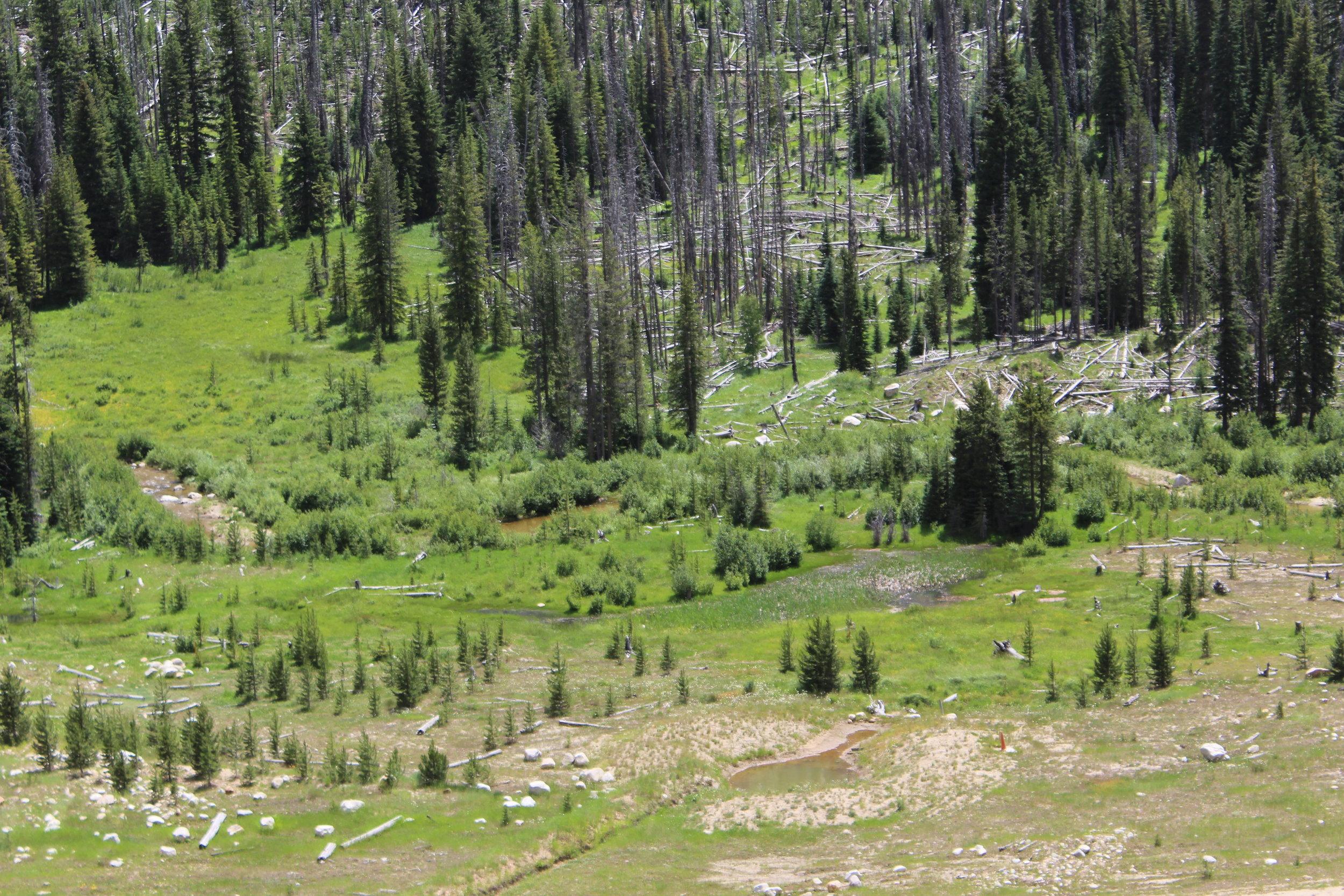 Reclaimed Meadow Creek wetlands
