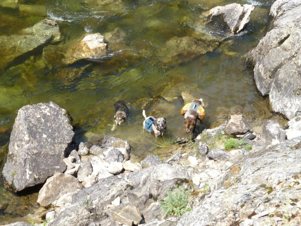 Dogs enjoying the clean water of the South Fork of the Salmon River. Photo by Nathan Stewart.