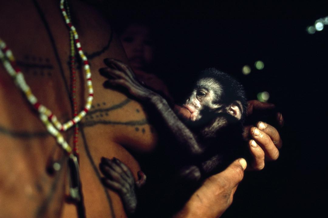 8MS monkey suckling.jpg