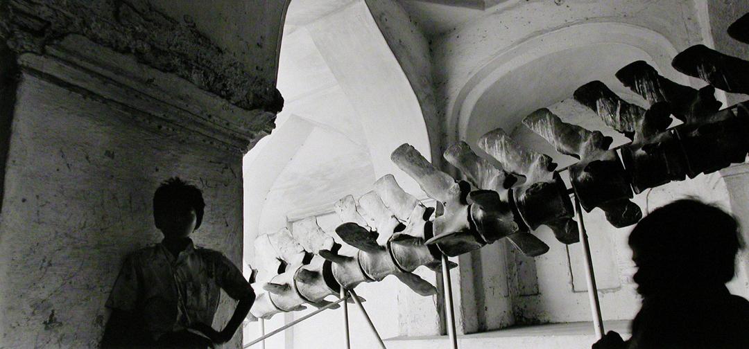 S15Majaraja's Whale Skeleton.jpg