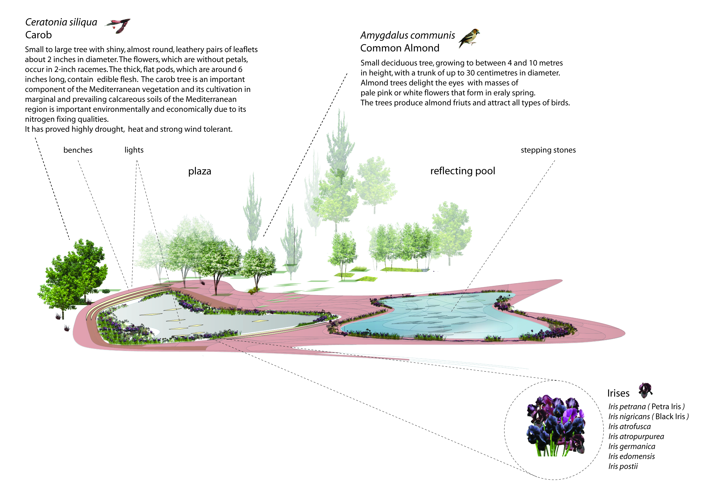 BA_ahca_axo pool plaza.jpg