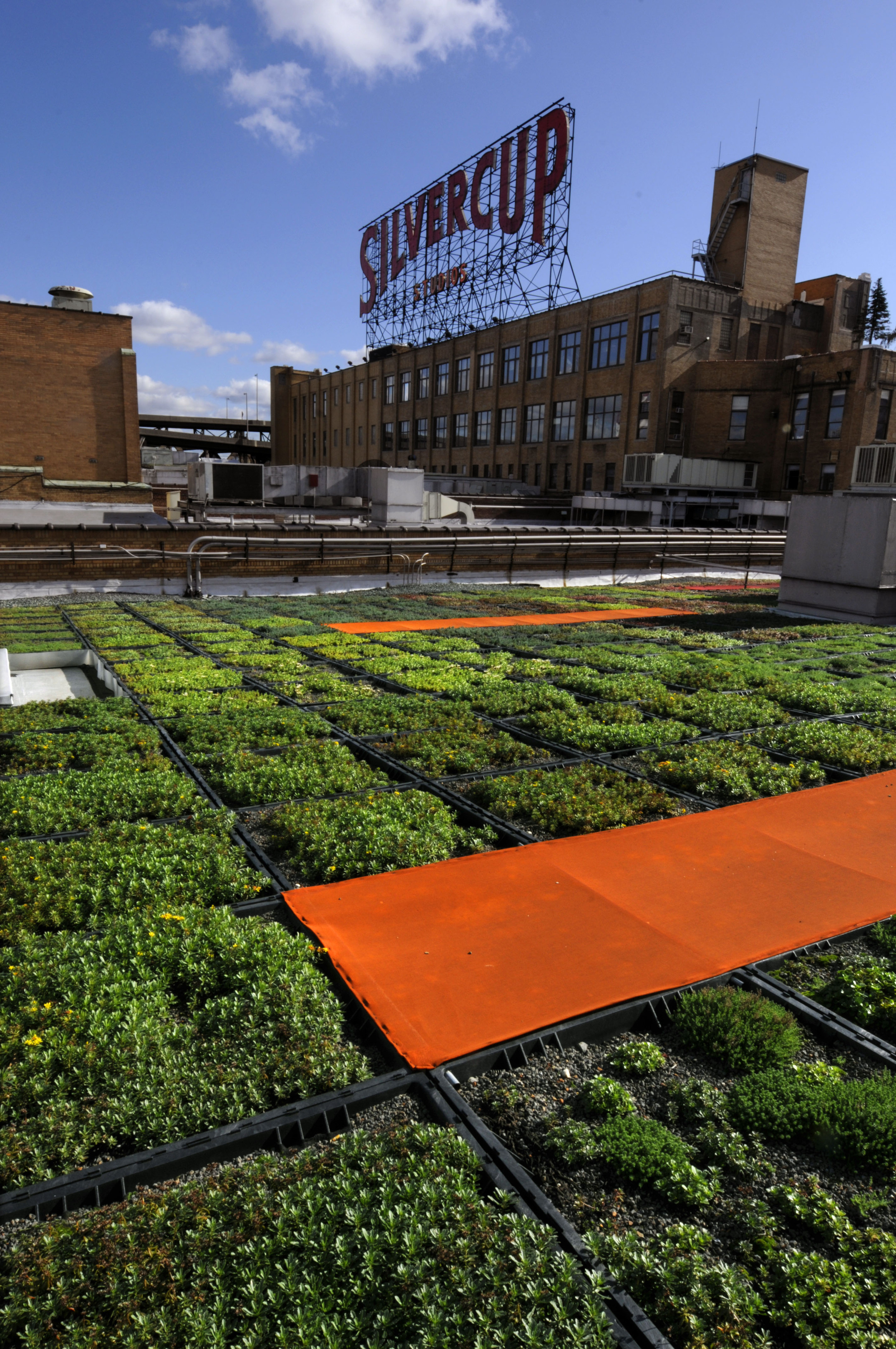 BA_LI Green City_Green Roof Planting_Mark Dye.jpg