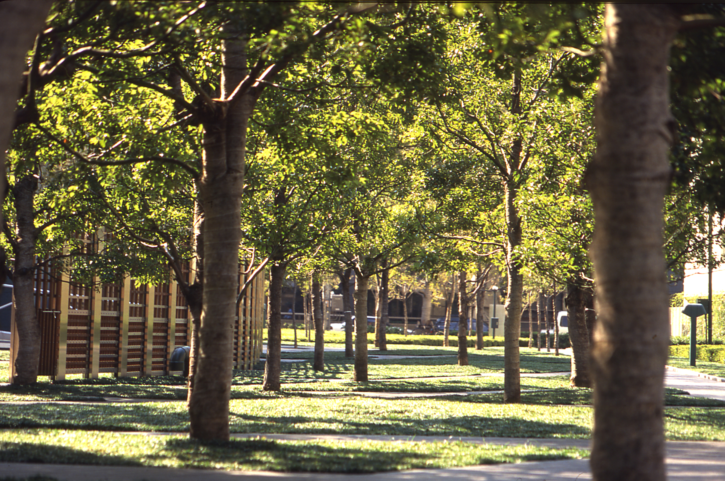 BA_ntt_trees.jpg
