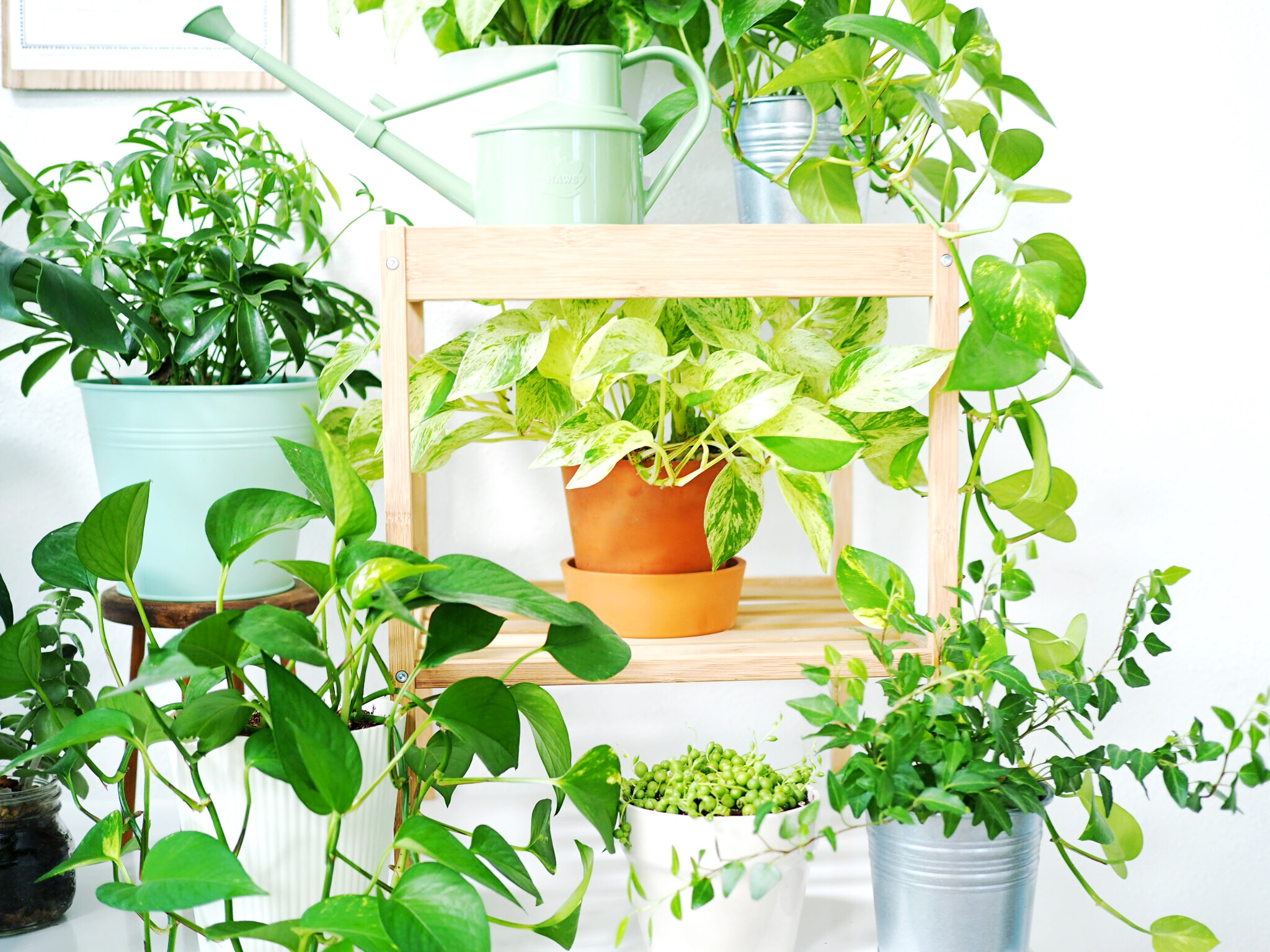 Paper Craft Pantry Plant Care Guide + Watering Schedule For House Plants