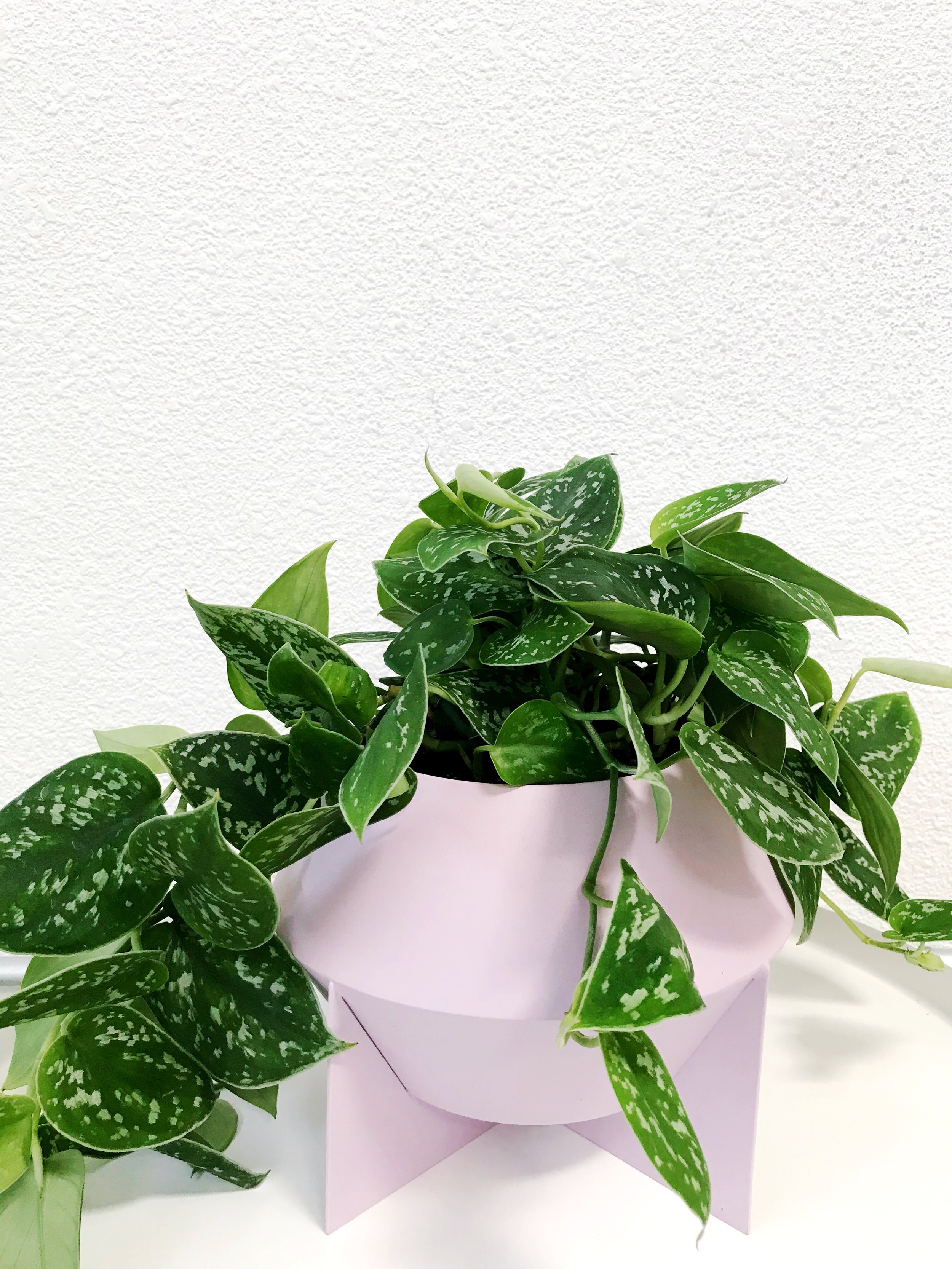 The Paper + Craft Pantry Round Up Blog: Unique Indoor Plants