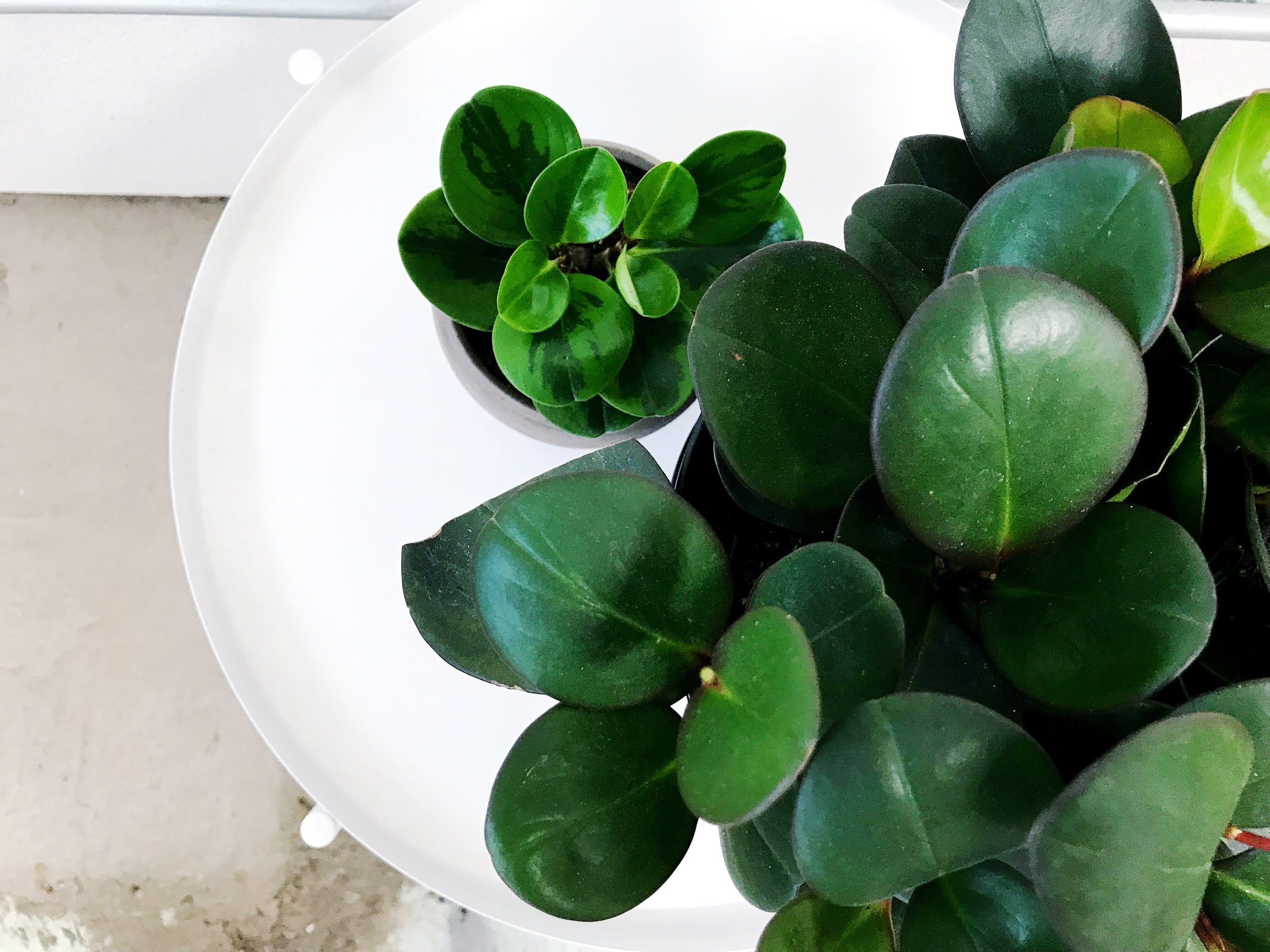 The Paper + Craft Pantry Blog Round Up of Best Indoor Plants