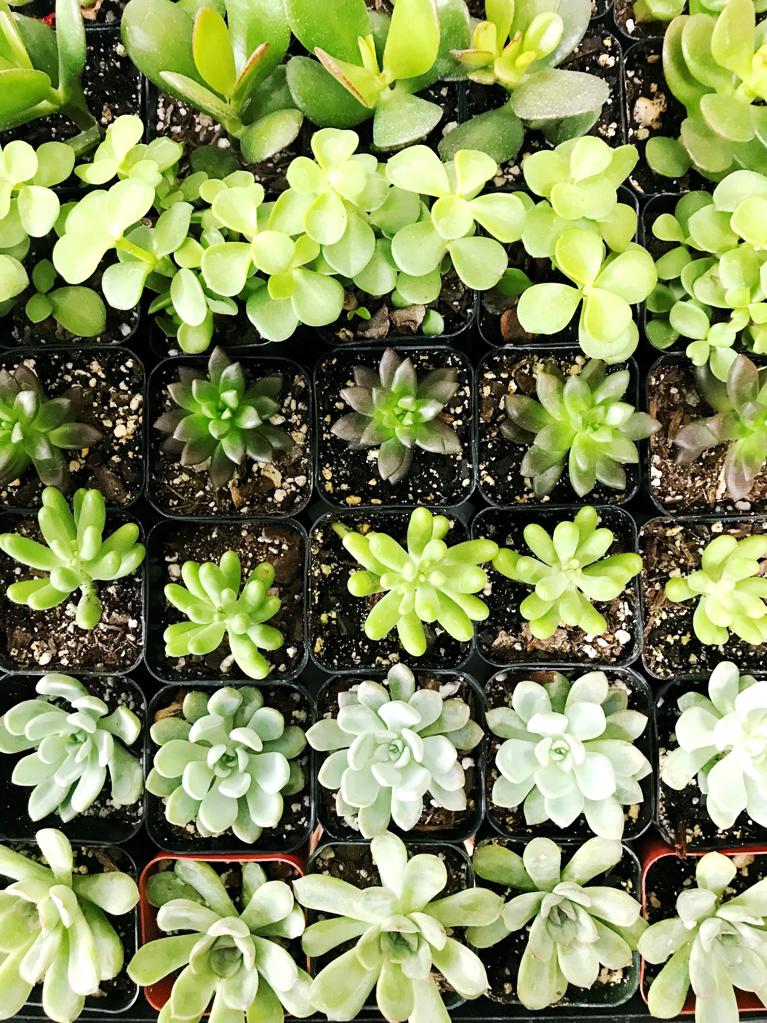 The Paper + Craft Pantry D.I.Y. Blog Summer Succulents