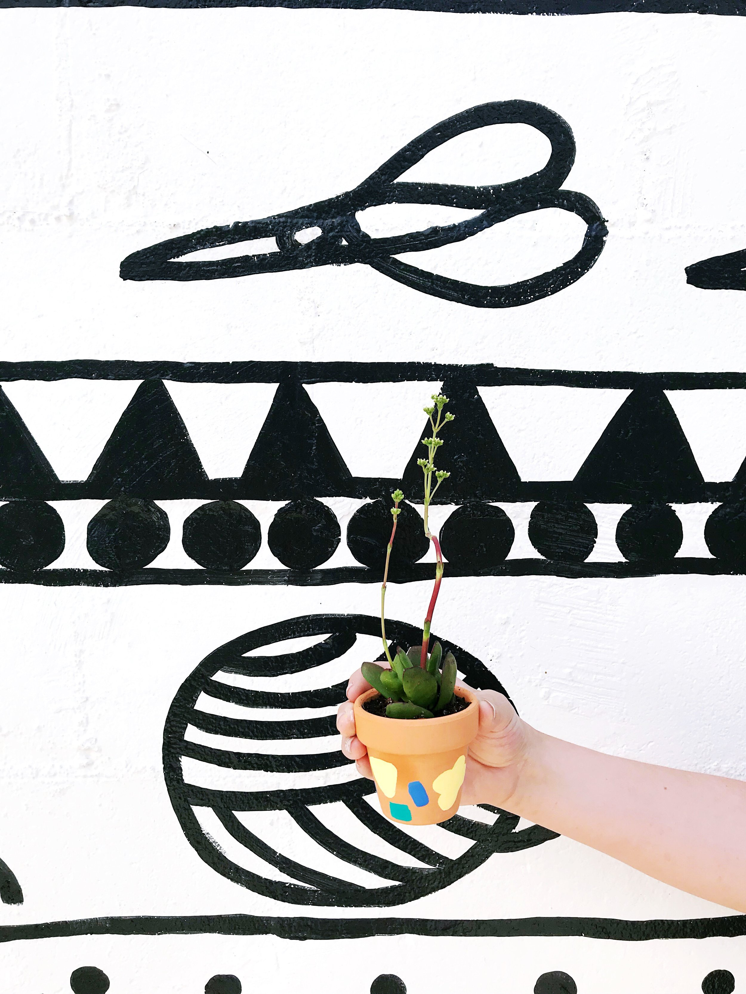 The Paper + Craft Pantry Do-It-Yourself Succulent Painted Pots Craft Party