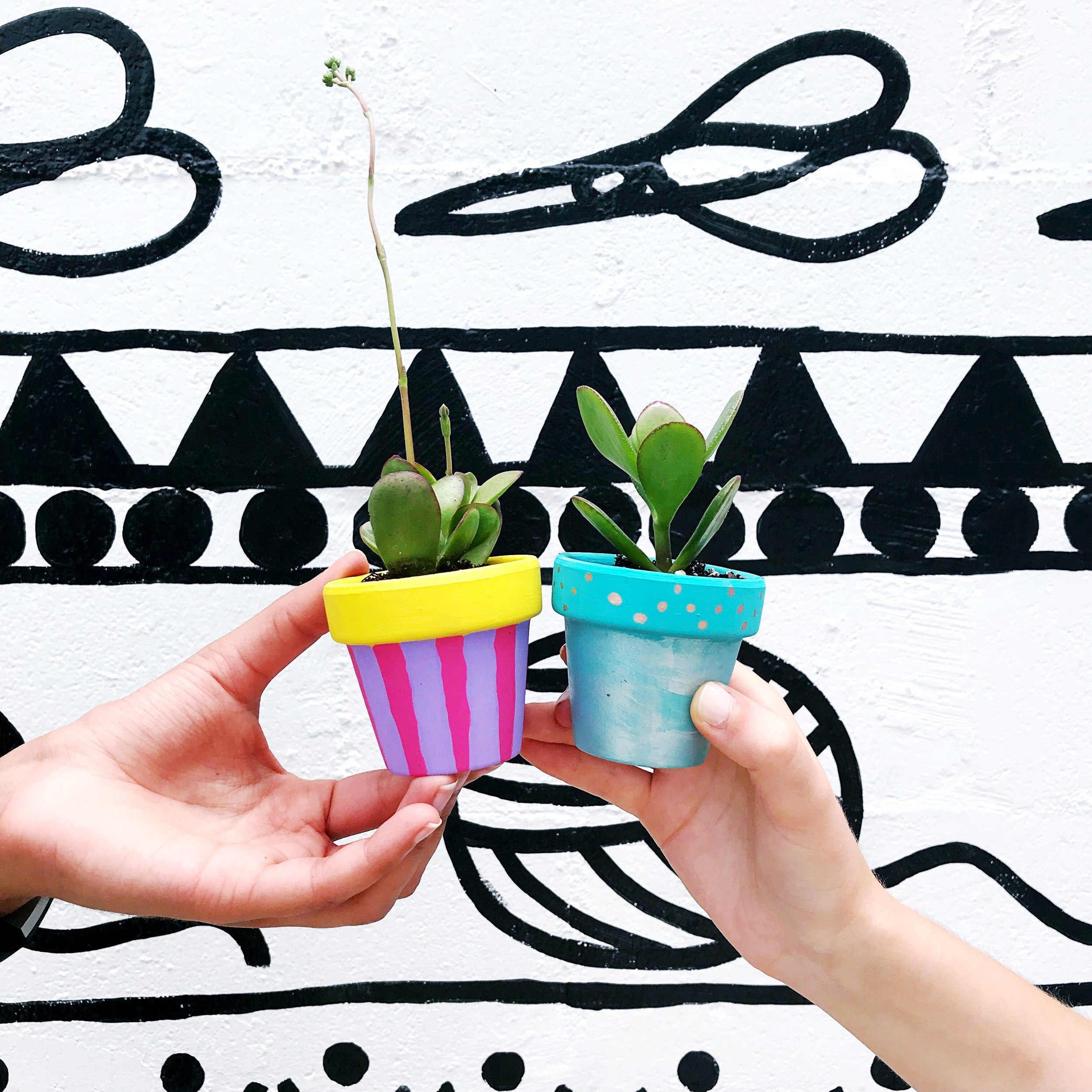 The Paper + Craft Pantry blog D.I.Y. Succulents