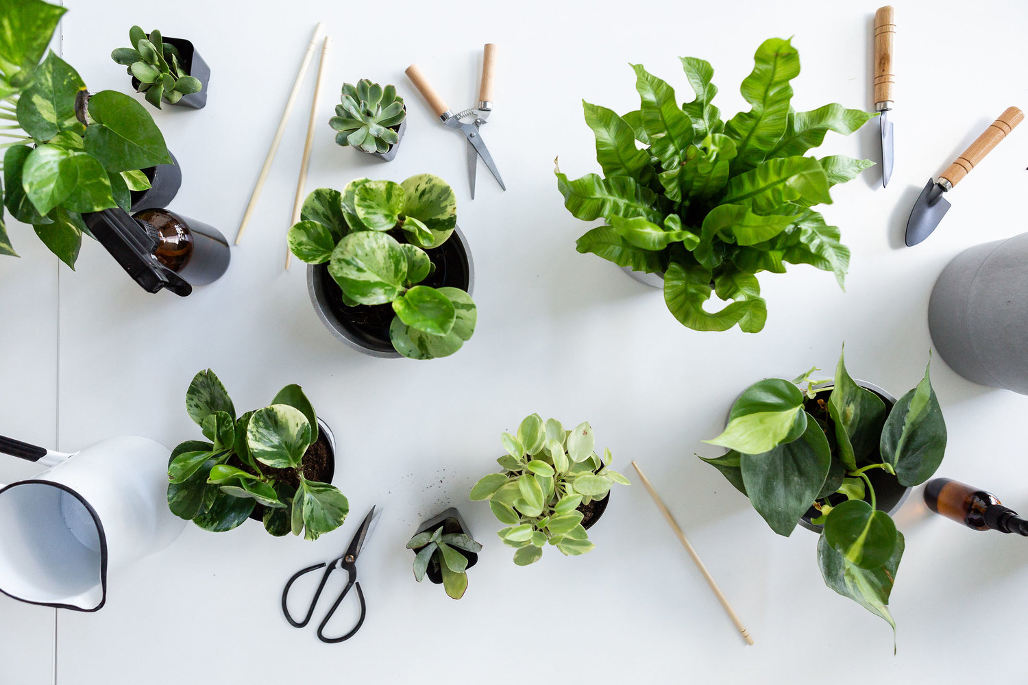 The Paper + Craft Pantry Blog: All of our favorite easy to care for house plants.