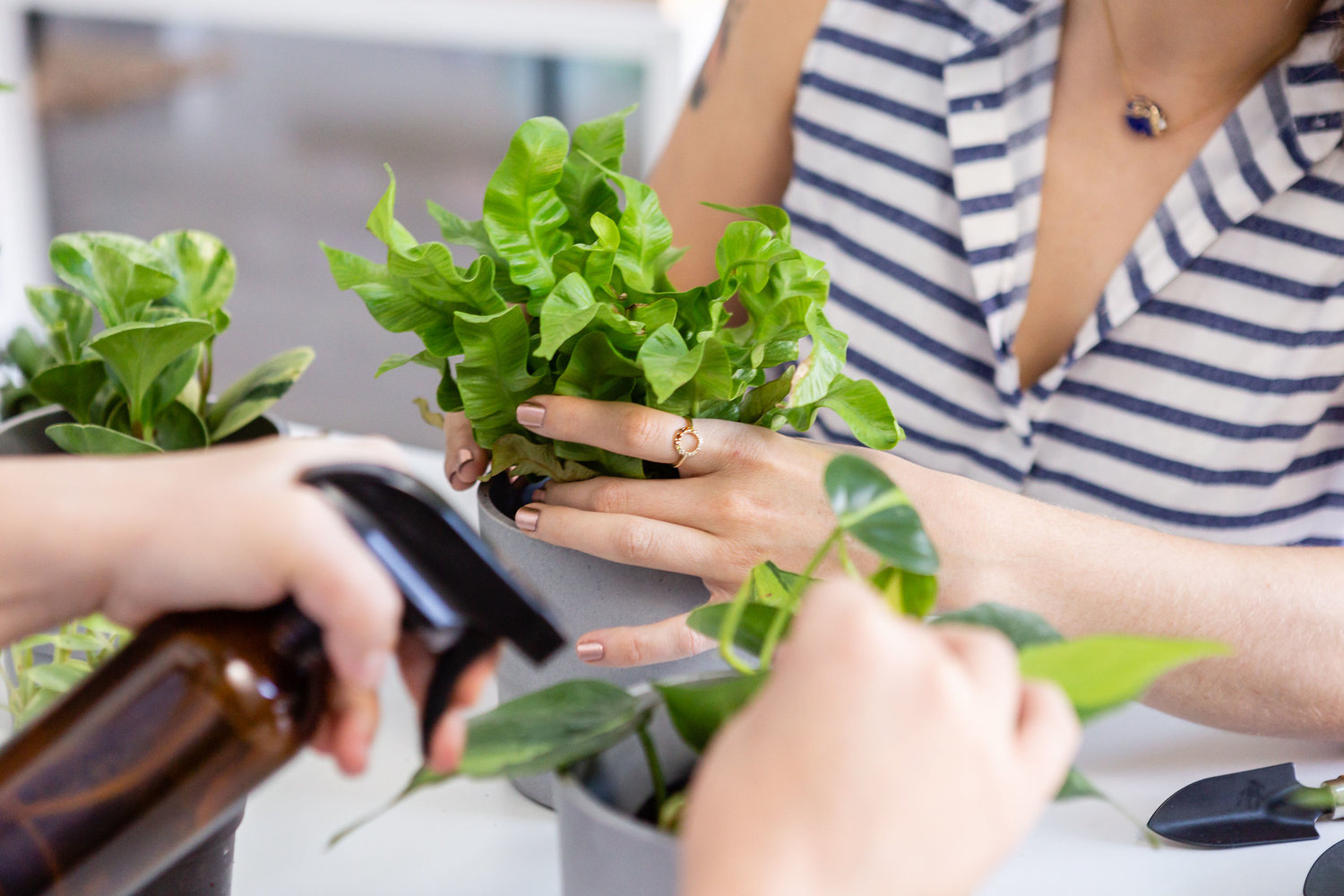The Paper + Craft Pantry Blog: House Plant 101 workshop.
