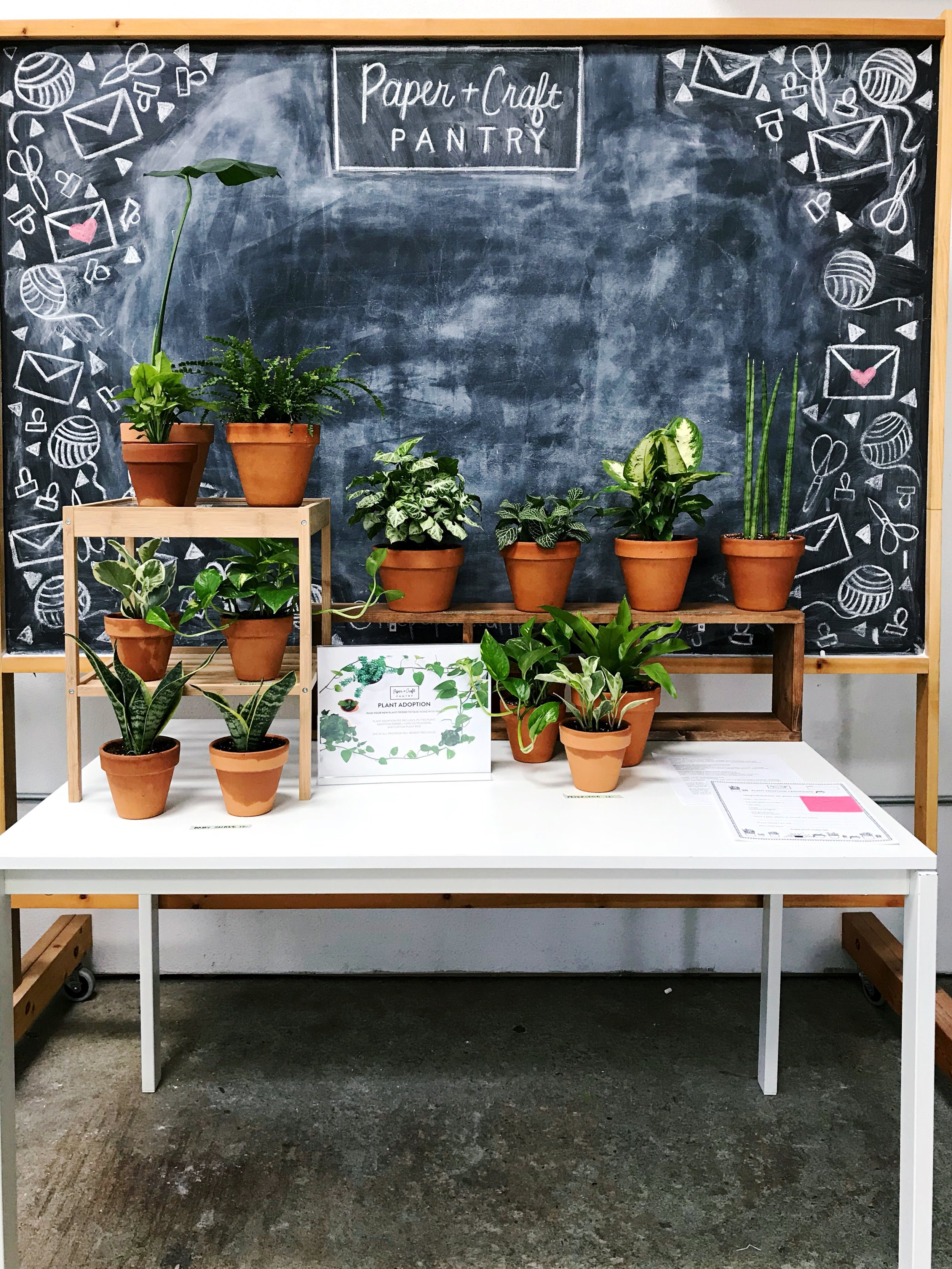"""Last year's plant adoption station at our Earth Day Pop Up Party may have been the very best thing we've ever done- each plant came complete with """"adoption"""" papers + a portion of proceeds went towards planing new trees in Austin!"""