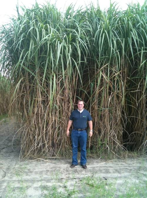 David Walker Jr. with mature Sweet Sorghum from The University of Florida