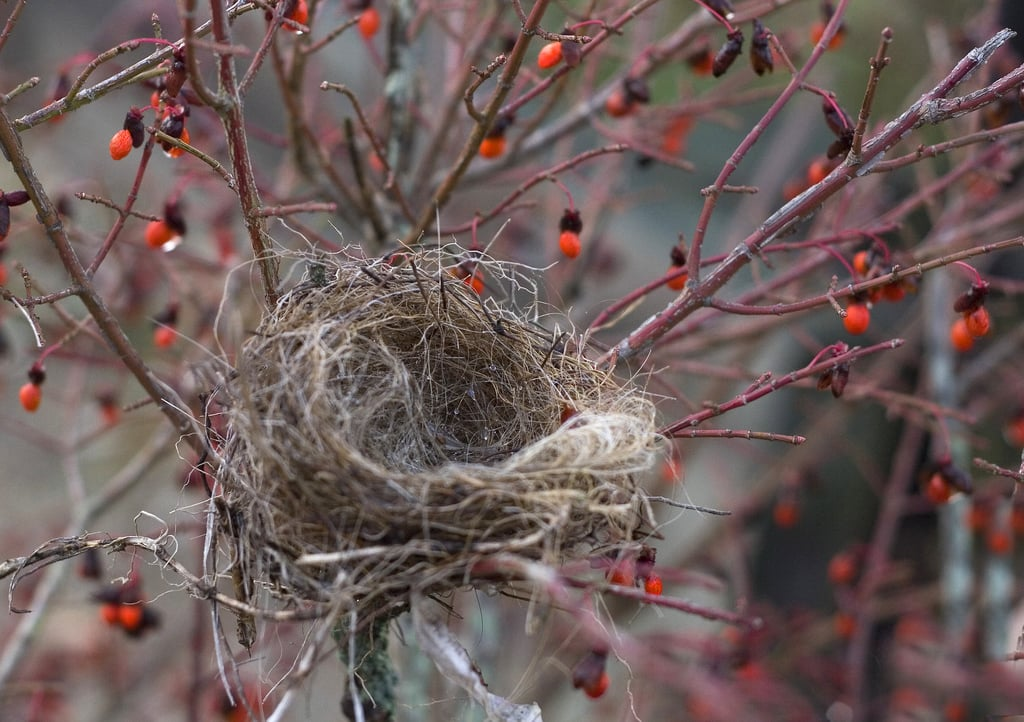 changing-time-empty-nest-Americas-Family-Coaches-radio-audio-podcast