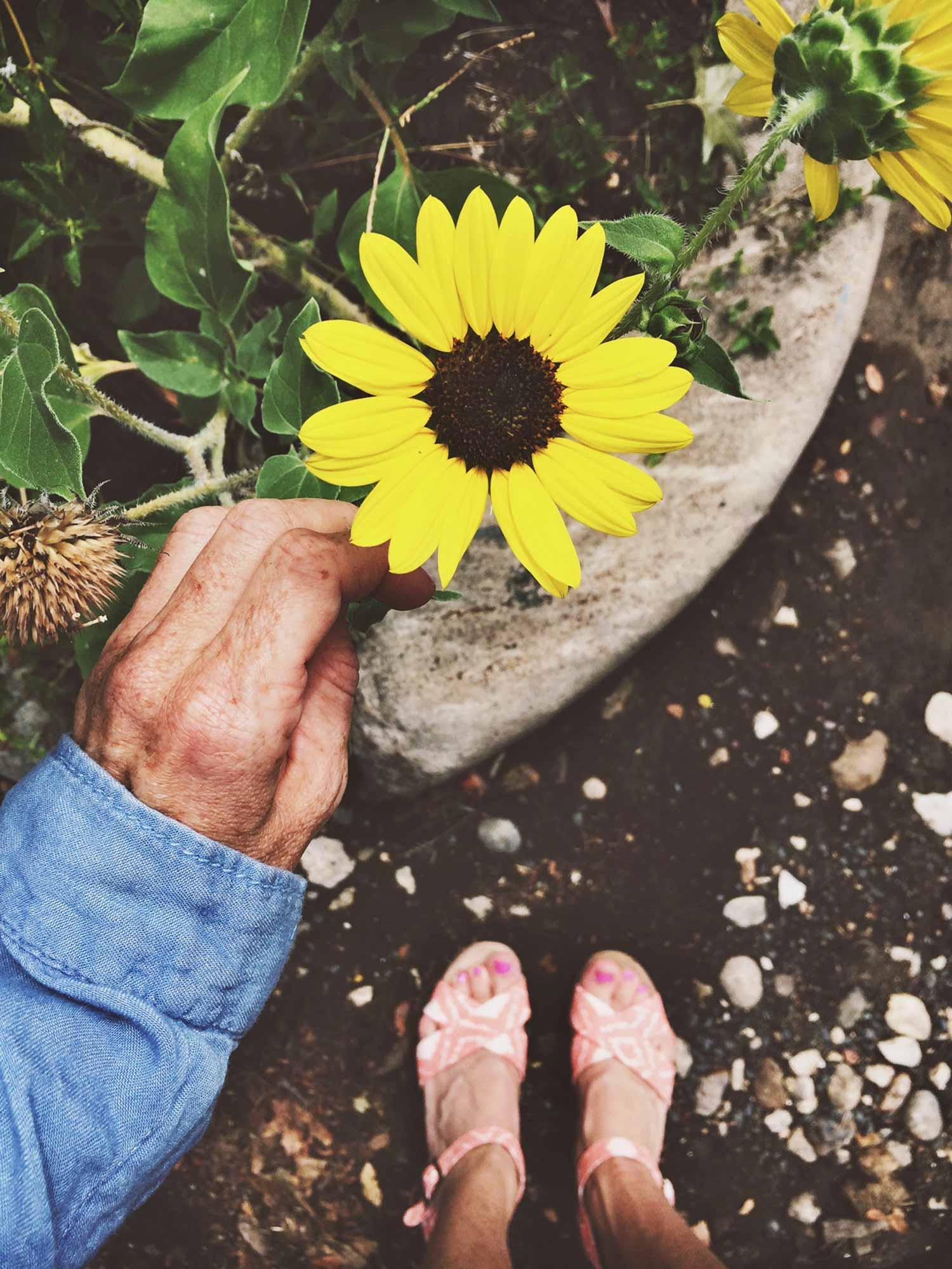Sunflower_OPT.jpg