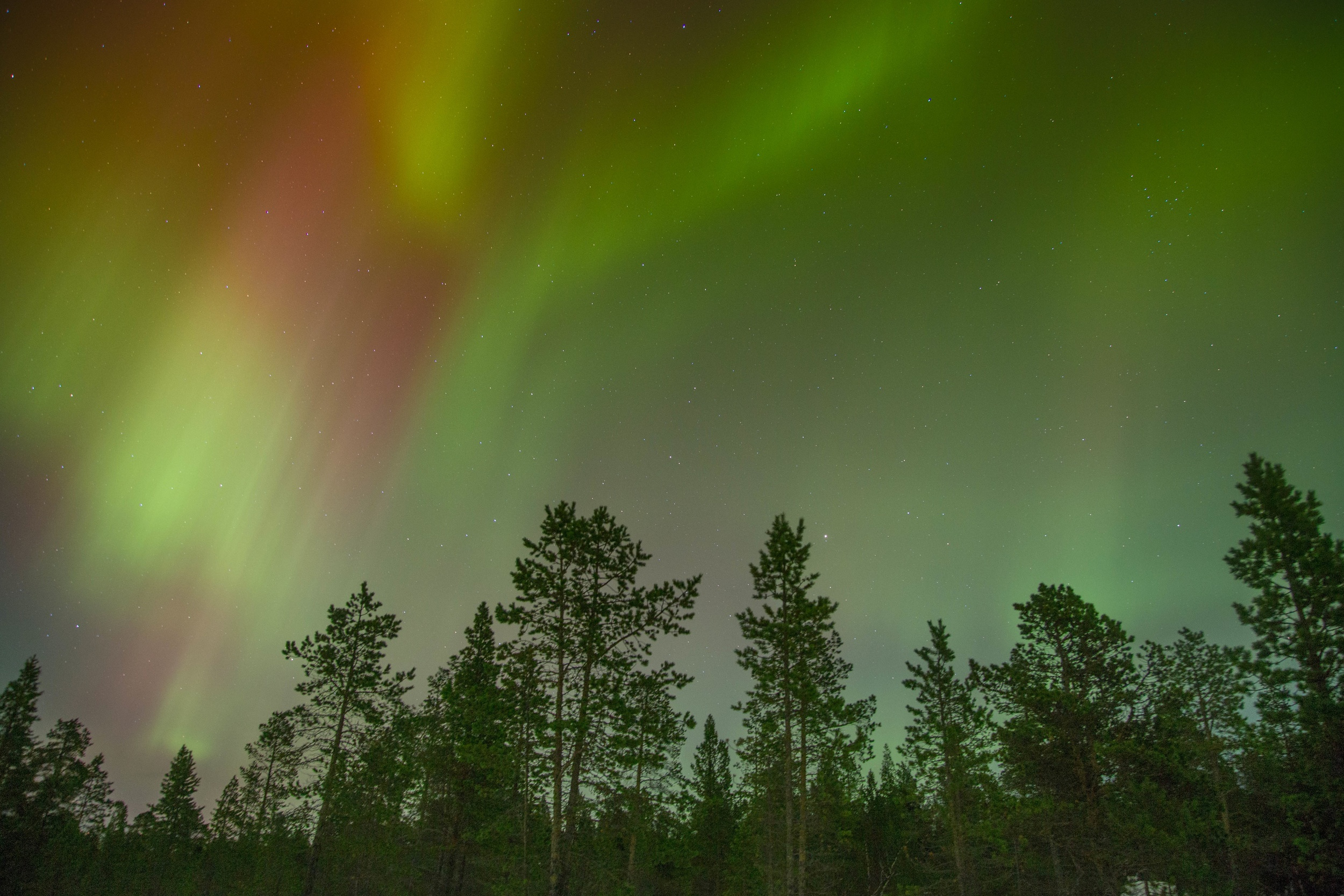 Picture of aurora in the night sky