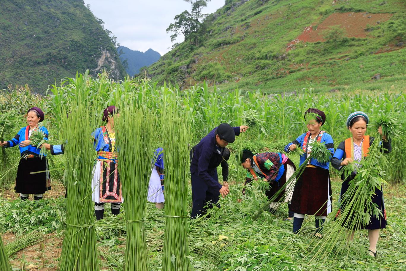 Vietman hmong women artisans.jpg