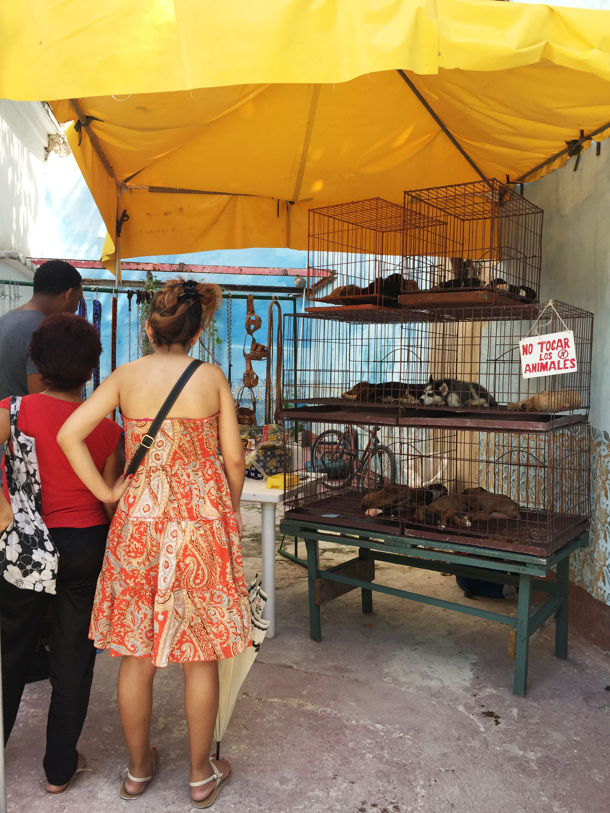 Puppies in cages awaiting new homes while others starve to death on the streets.