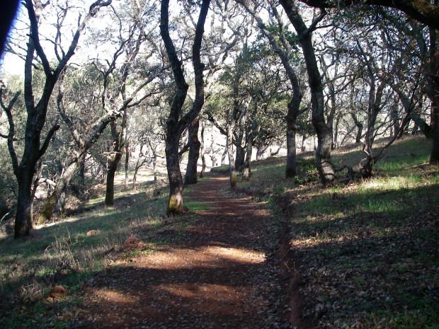 Modern Trails