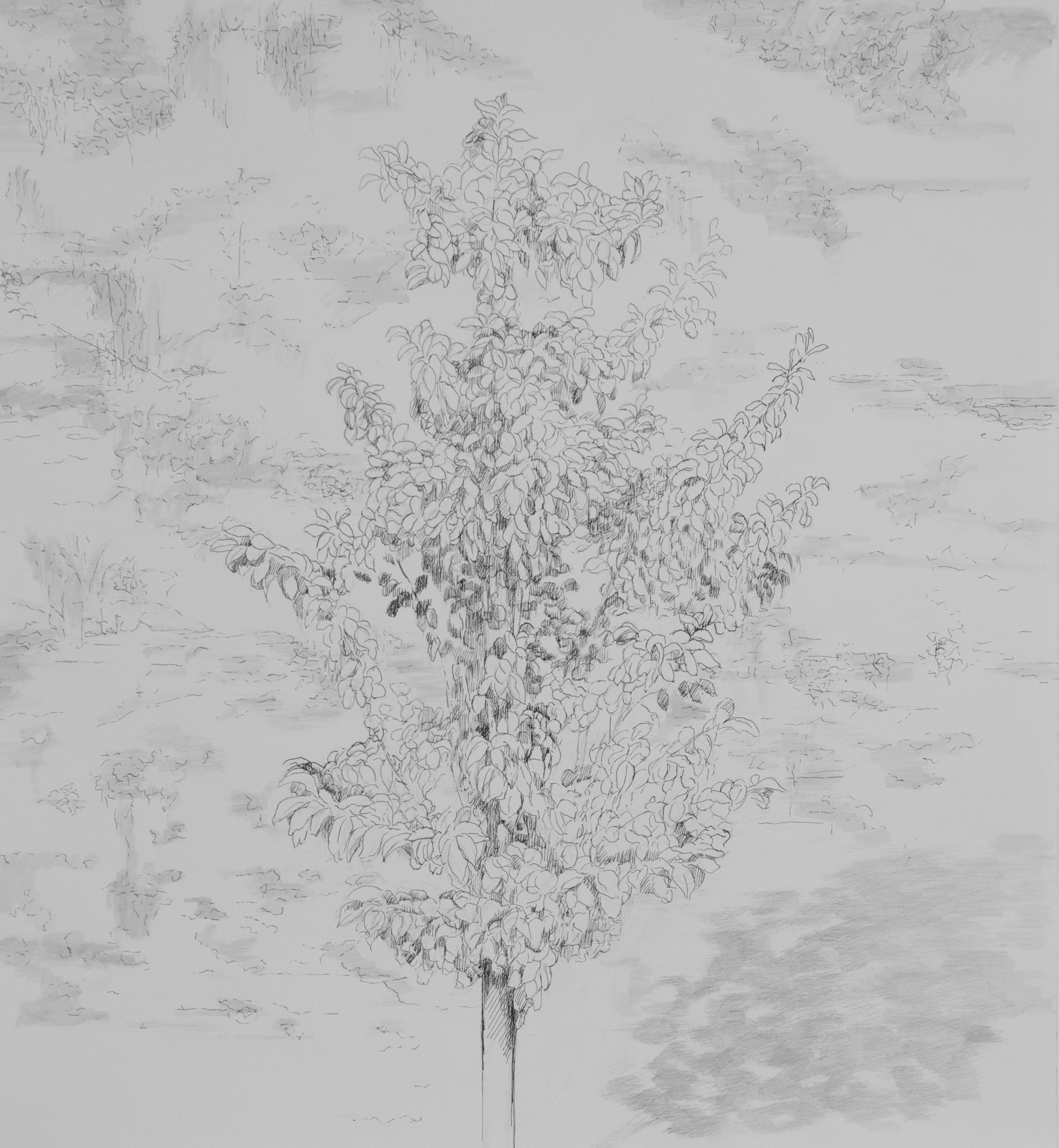 """Pear Tree"""