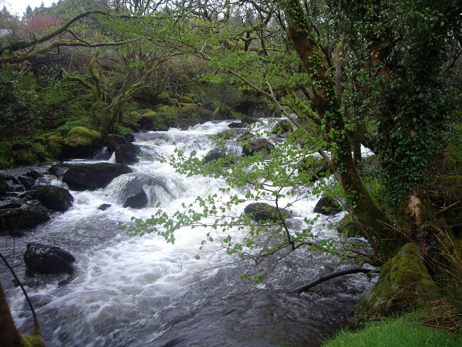 River cascading by Snowdon Lodge 004.JPG