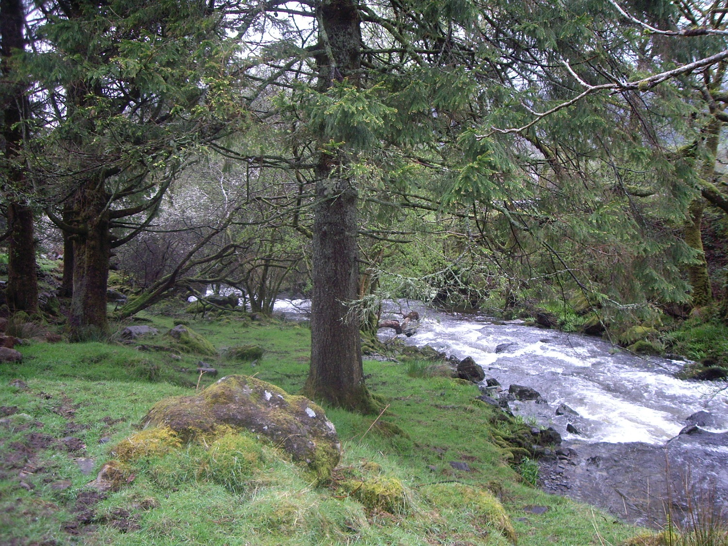 River cascading by Snowdon Lodge 007.JPG