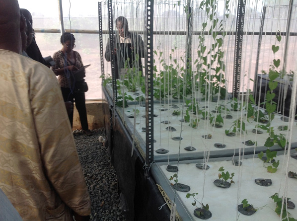 Scientists from CRI Ghana viewing yam plantlets growing at the aeroponics facility at Umudike / Photo via blogs.iita.org