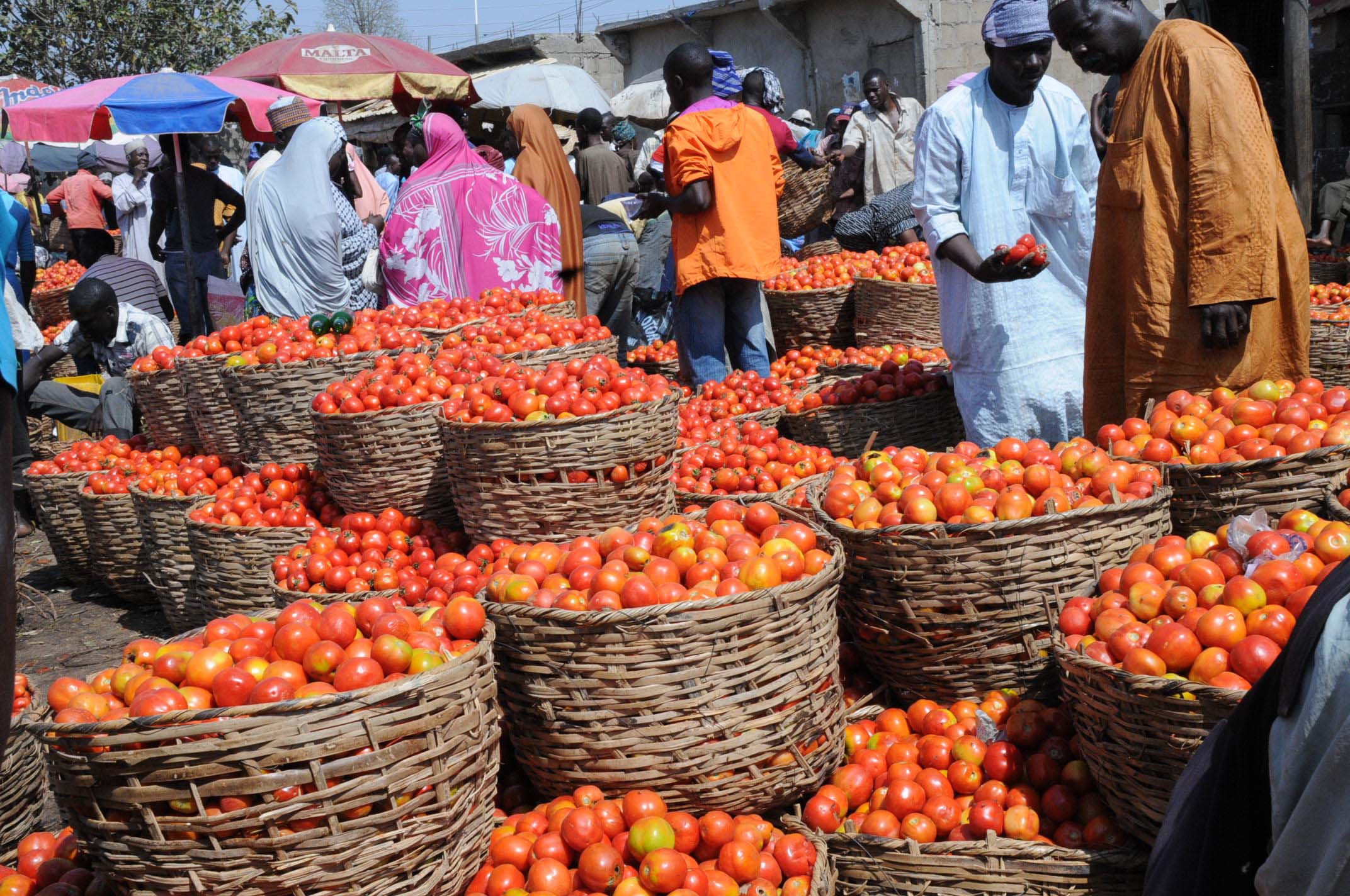Tomatoes on display in a Nigerian Market / Photo via agricnation.com