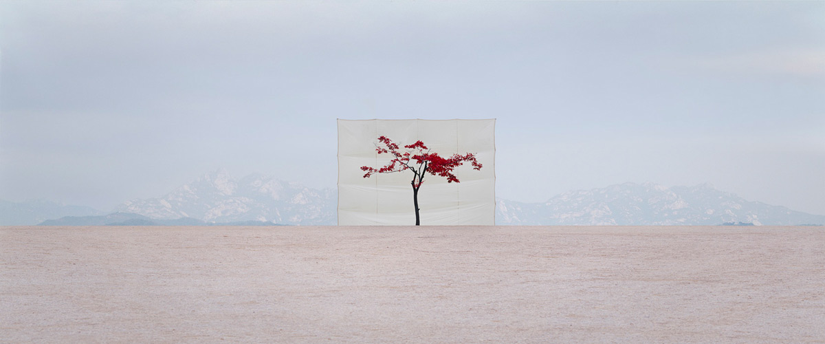 Tree #5, 2007 from the series Tree by Myoung Ho Lee