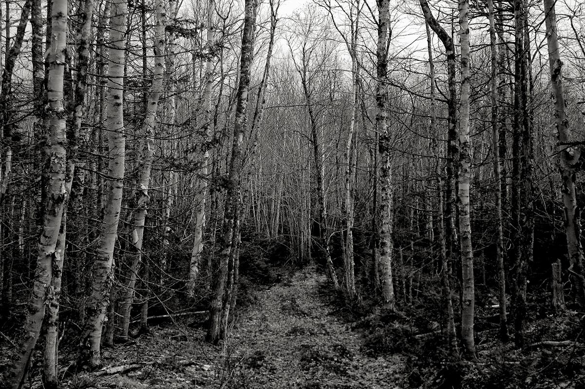 Some Paths.jpg