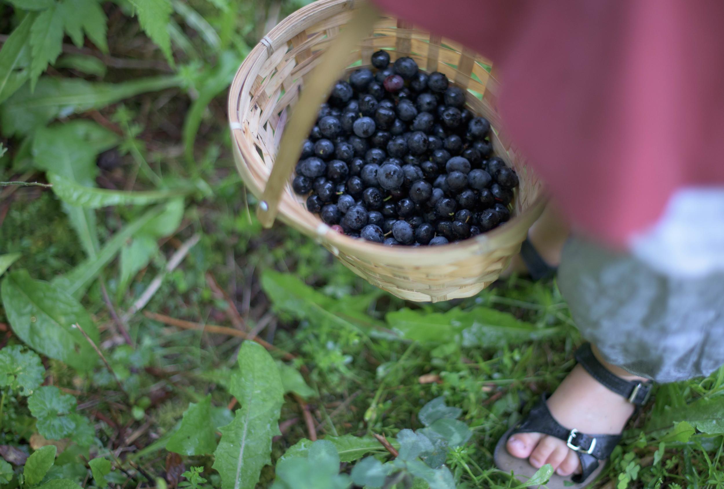 Blueberry-0048.jpg