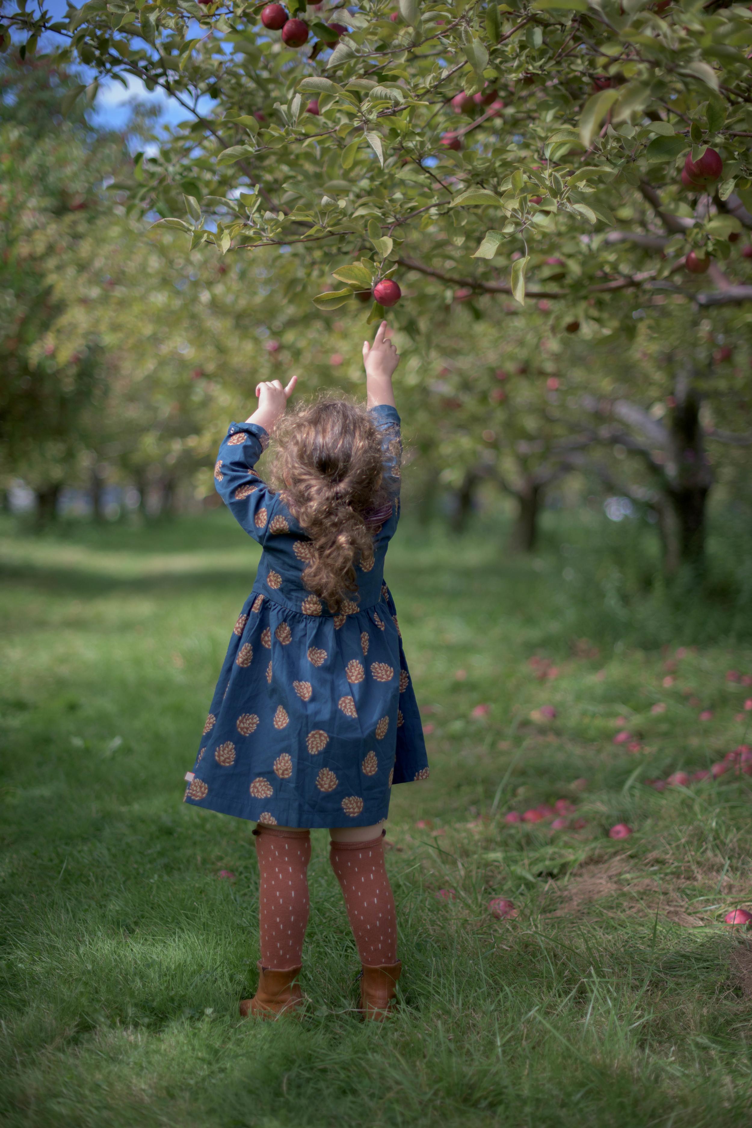 Apple-1789.jpg