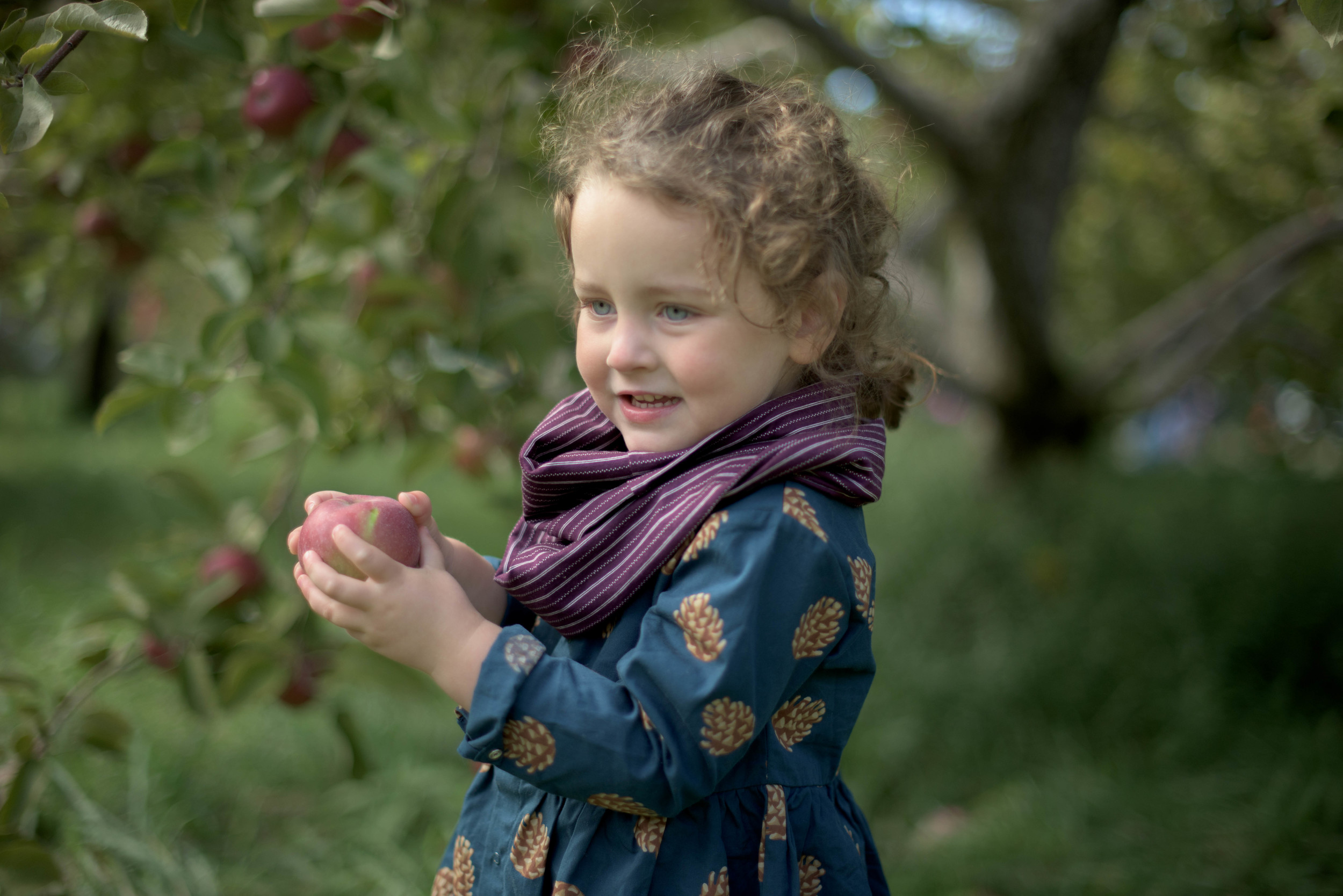 Apple-1804.jpg