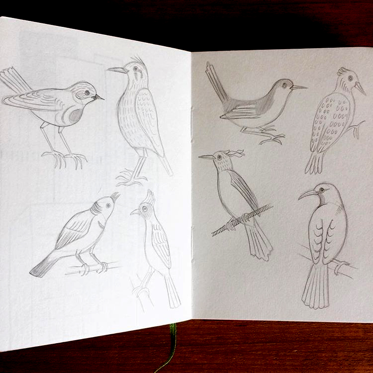 Sketching from a book called 'Indian Birds'