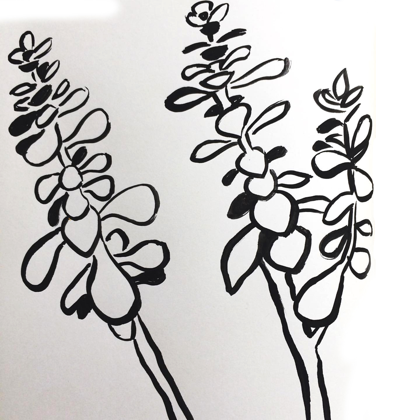 ink drawing of succulent