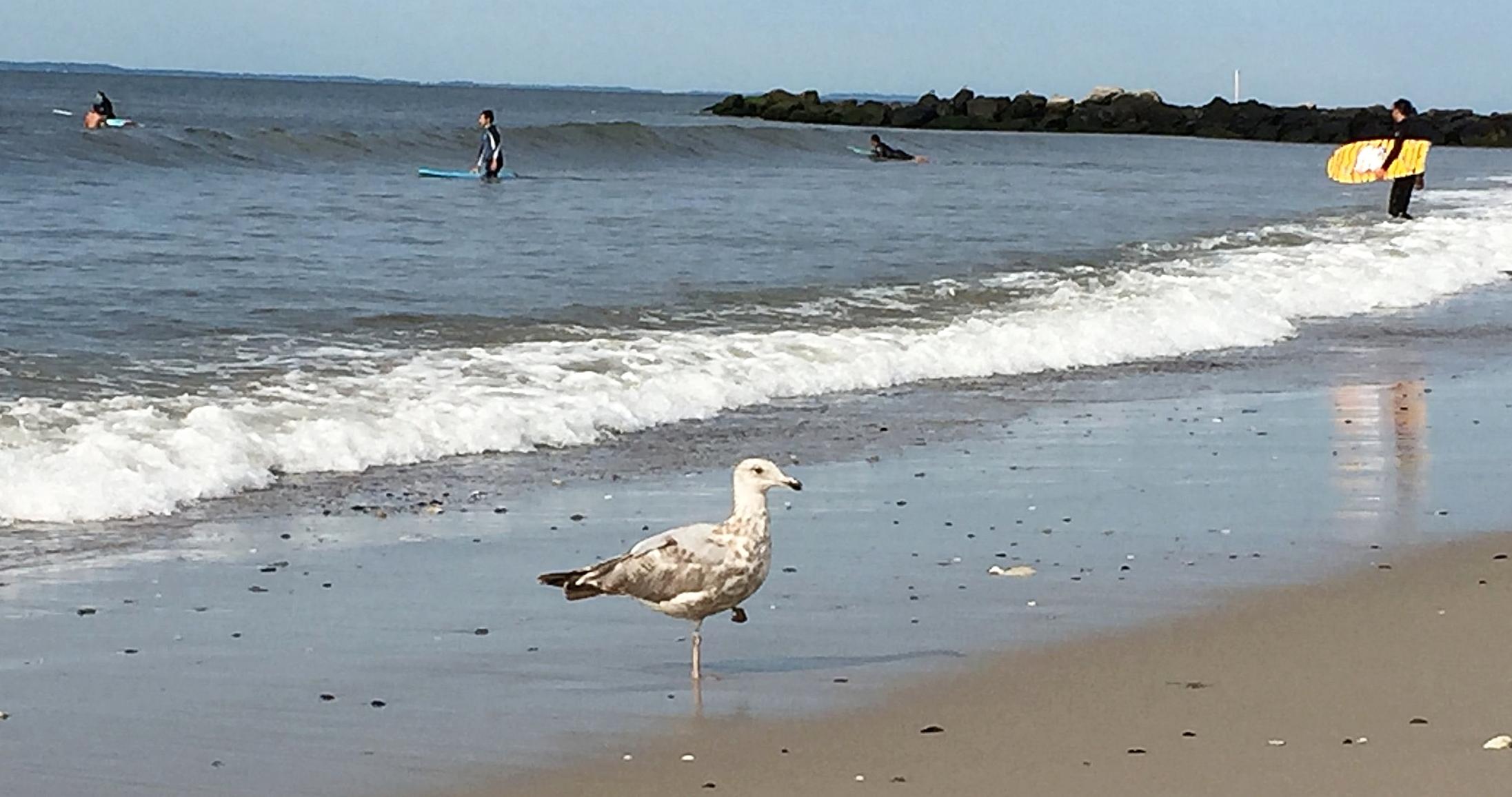 """Eileen,"" the one footed Bird of The Rockaways"