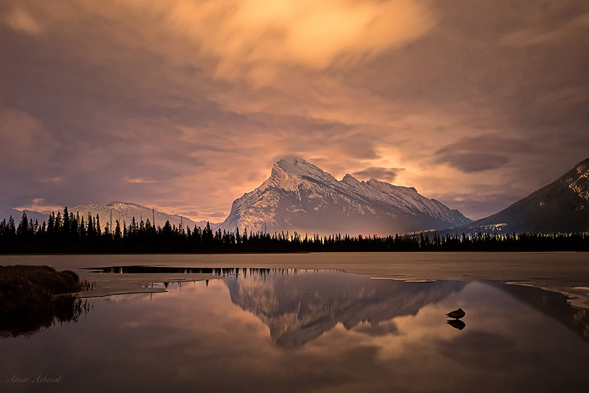 Mount Rundle and a Snow Goose