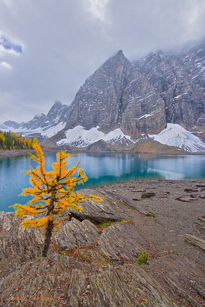 Floe Lake 170929f Amar Athwal.jpg